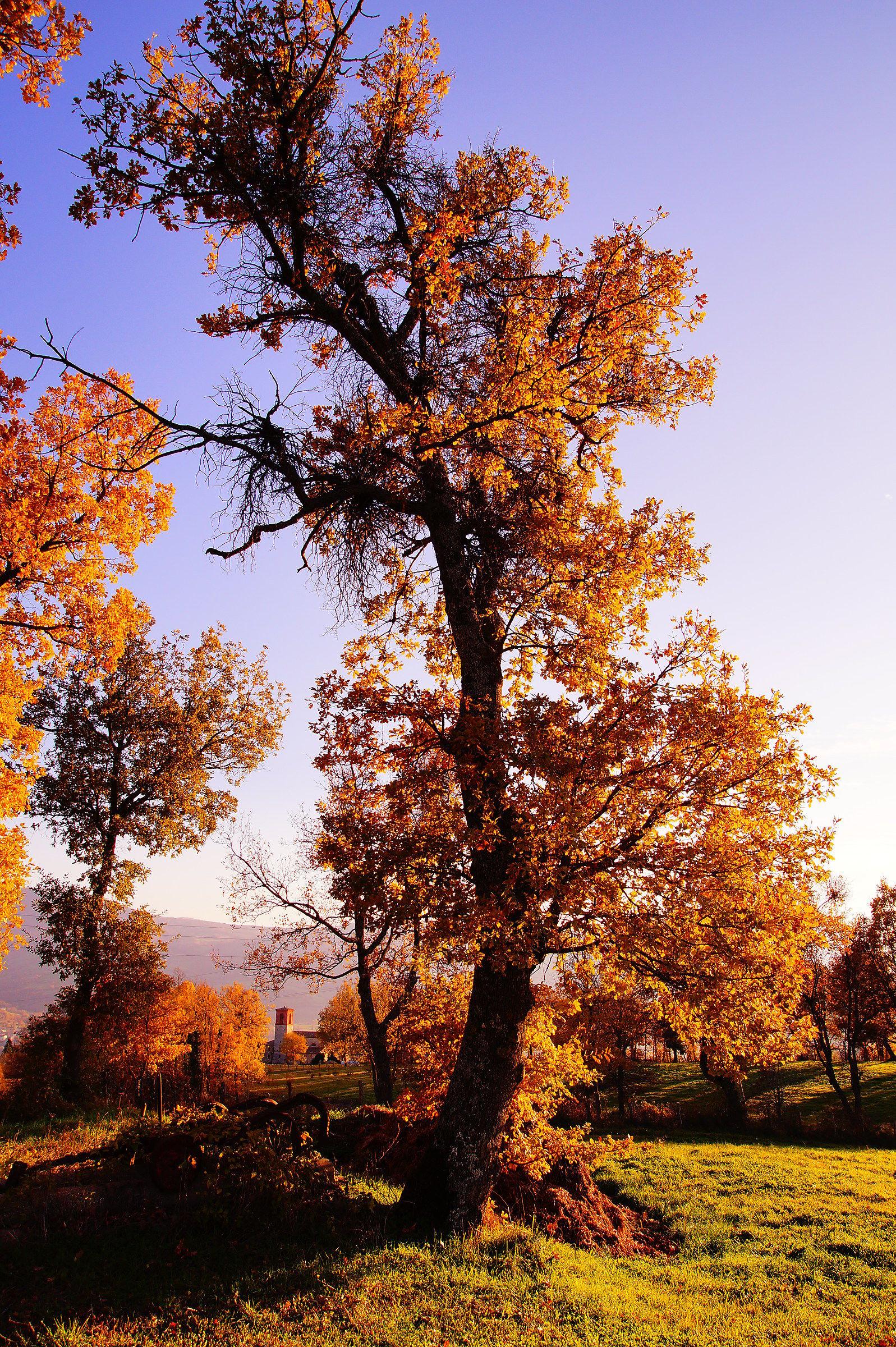Albero nel Montefeltro...