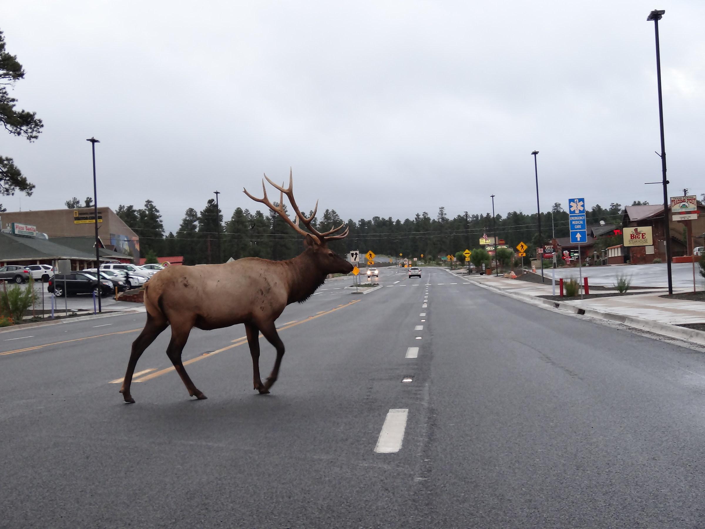 Deer ...
