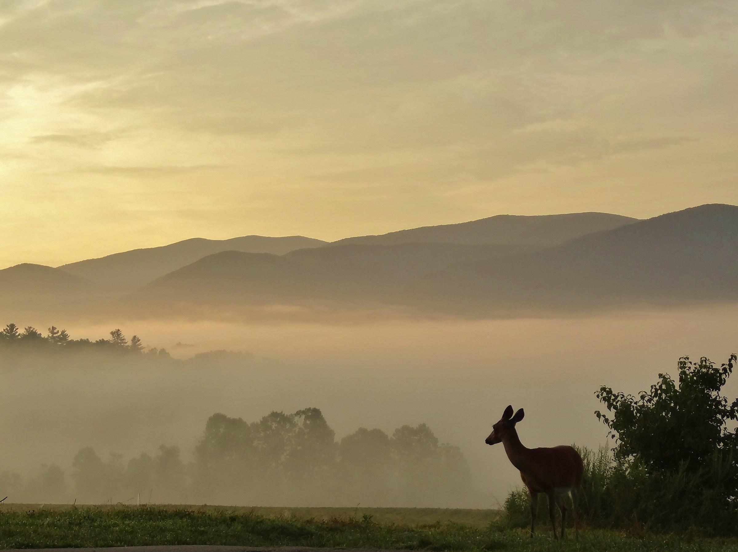 Deer at dawn...