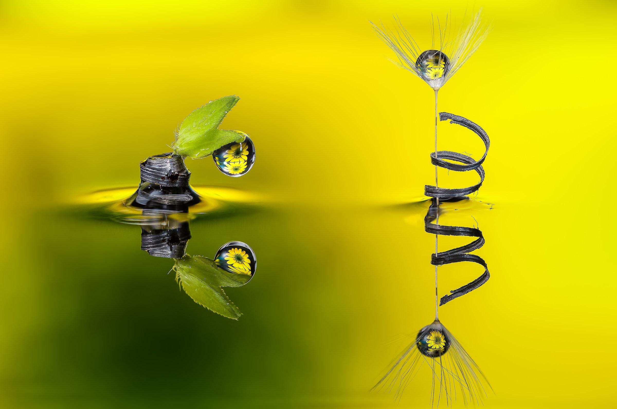 Drops & Flowers Macro fotografia by Mario Jr Nicorelli...