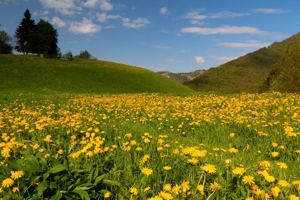 Nature Dresses Yellow...