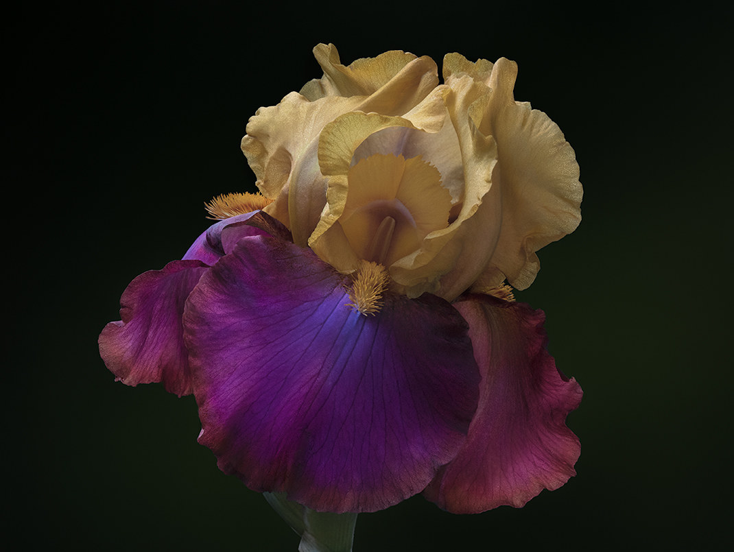 It's time for Iris...