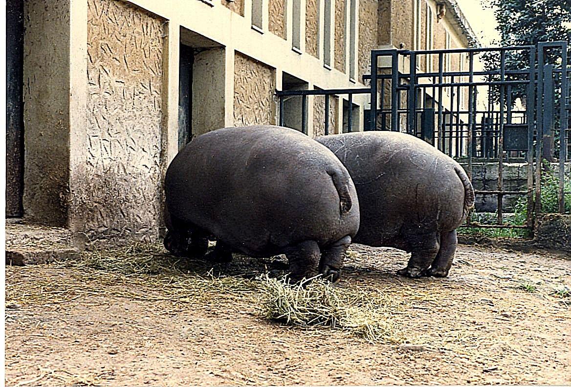 Zoo di Roma...