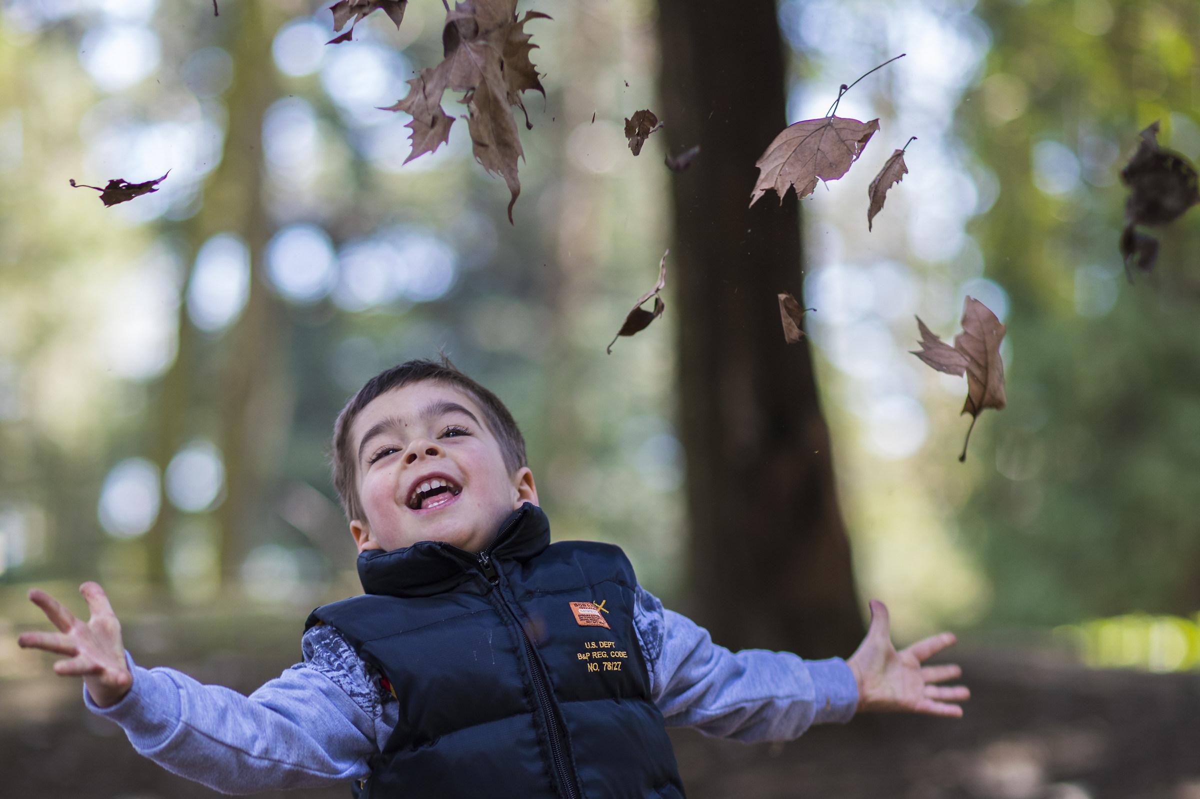 piovono foglie orizz...