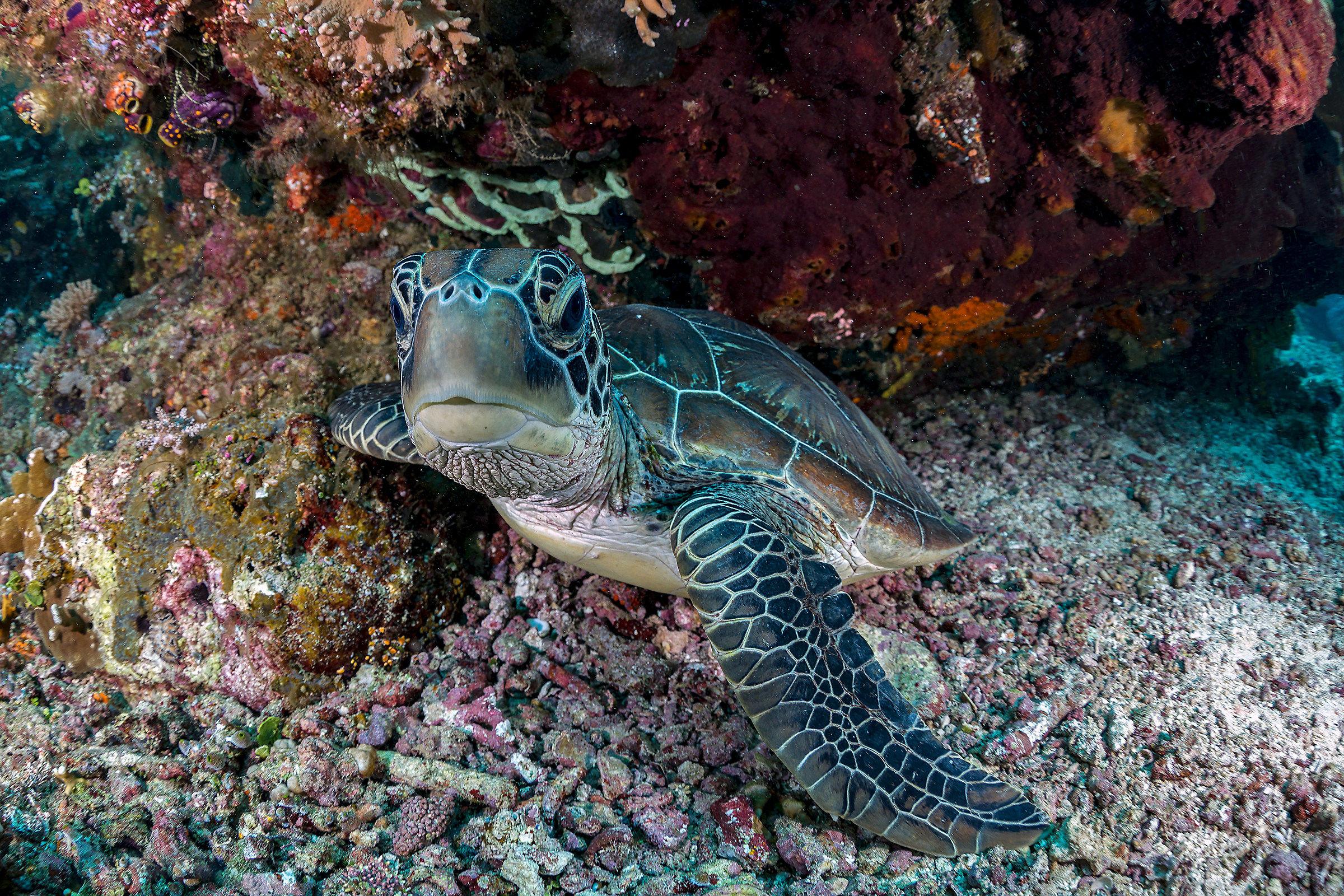 Curious Turtle...