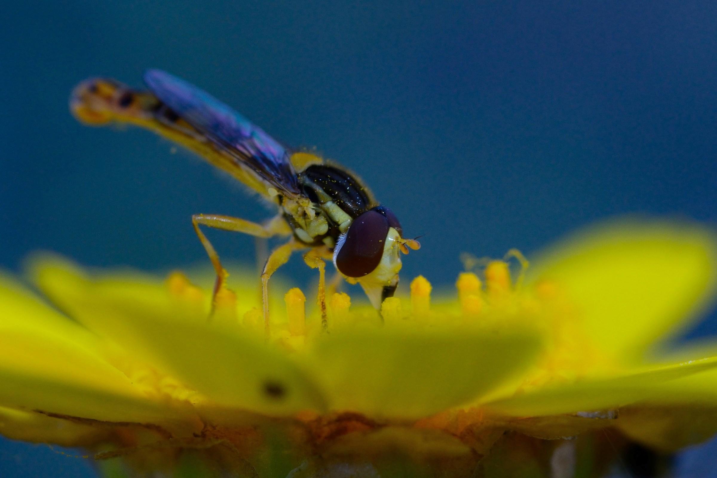 Blue Pollination ...