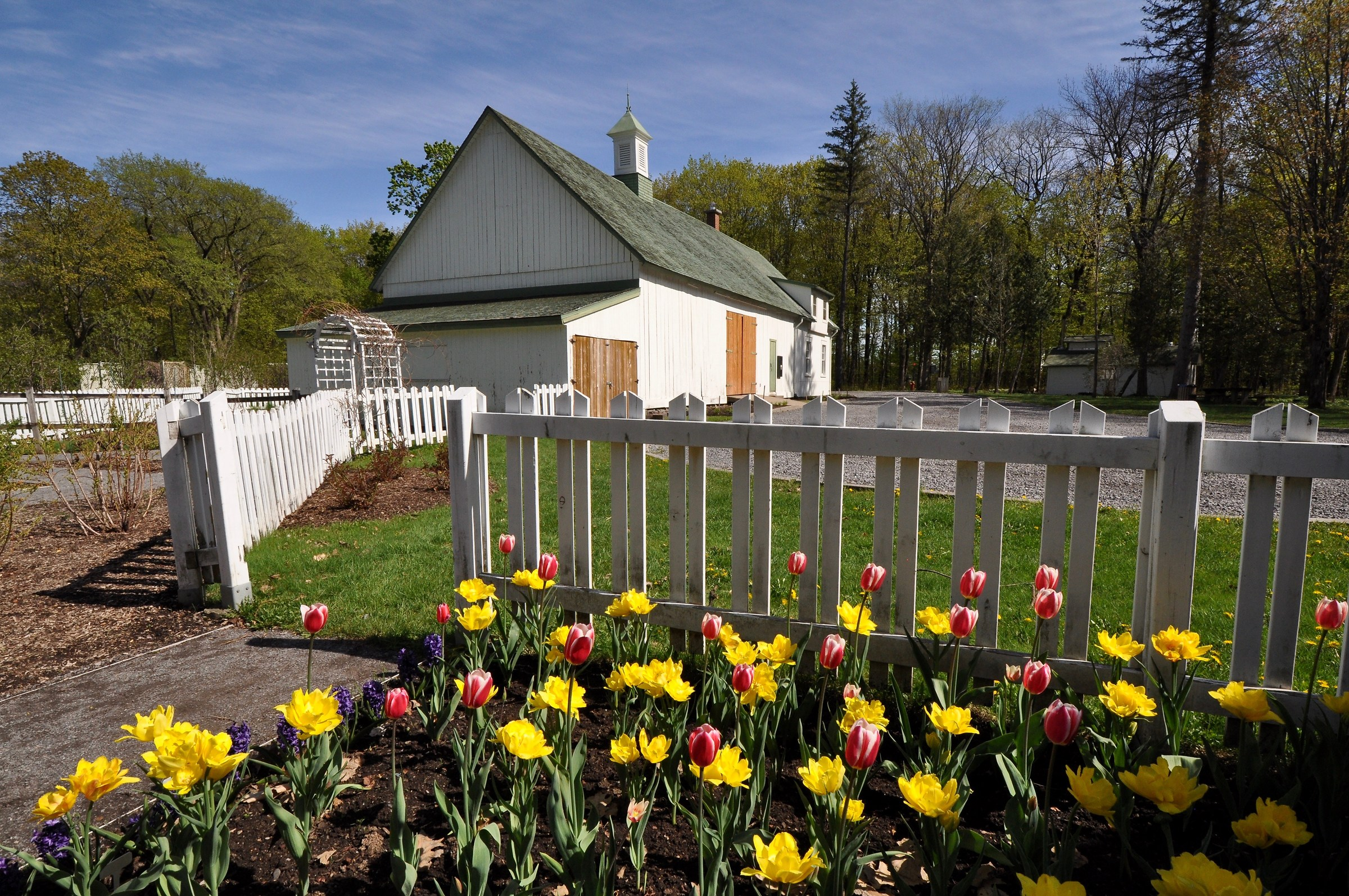 The joys of spring colors '' Tulips Quebec ''...