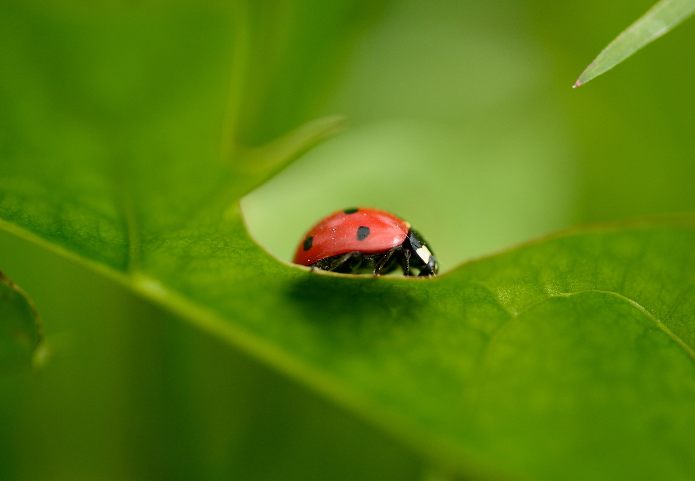 Red Bug on Green...