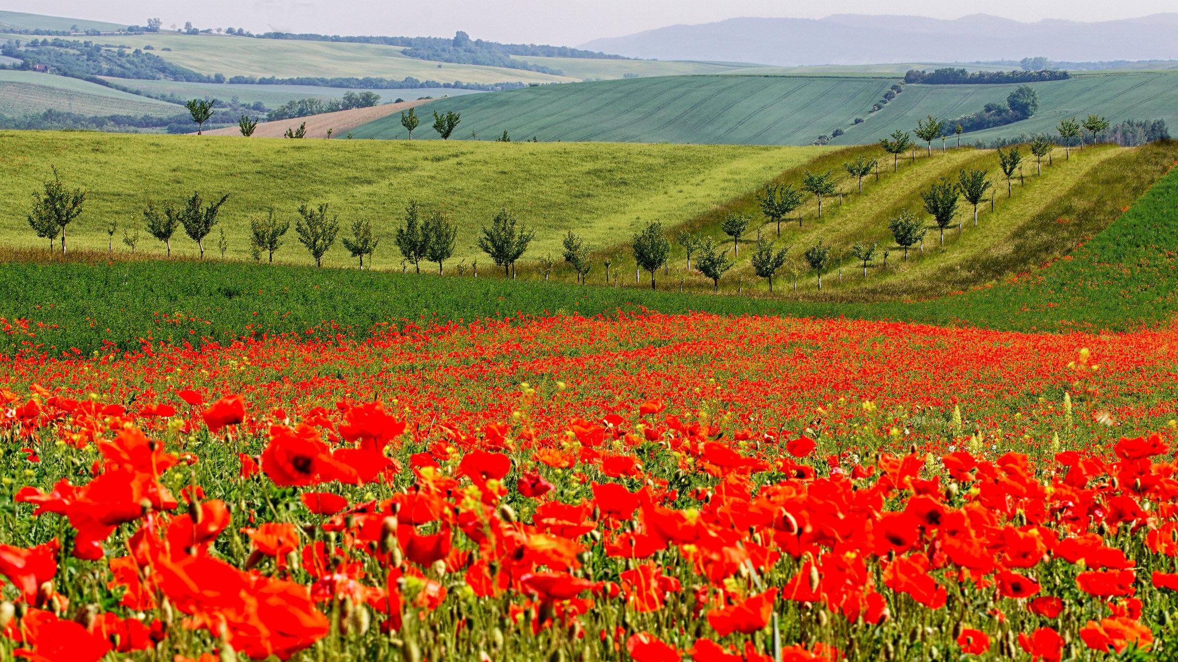 Moravian Tuscany (Toscana di Moravia)...