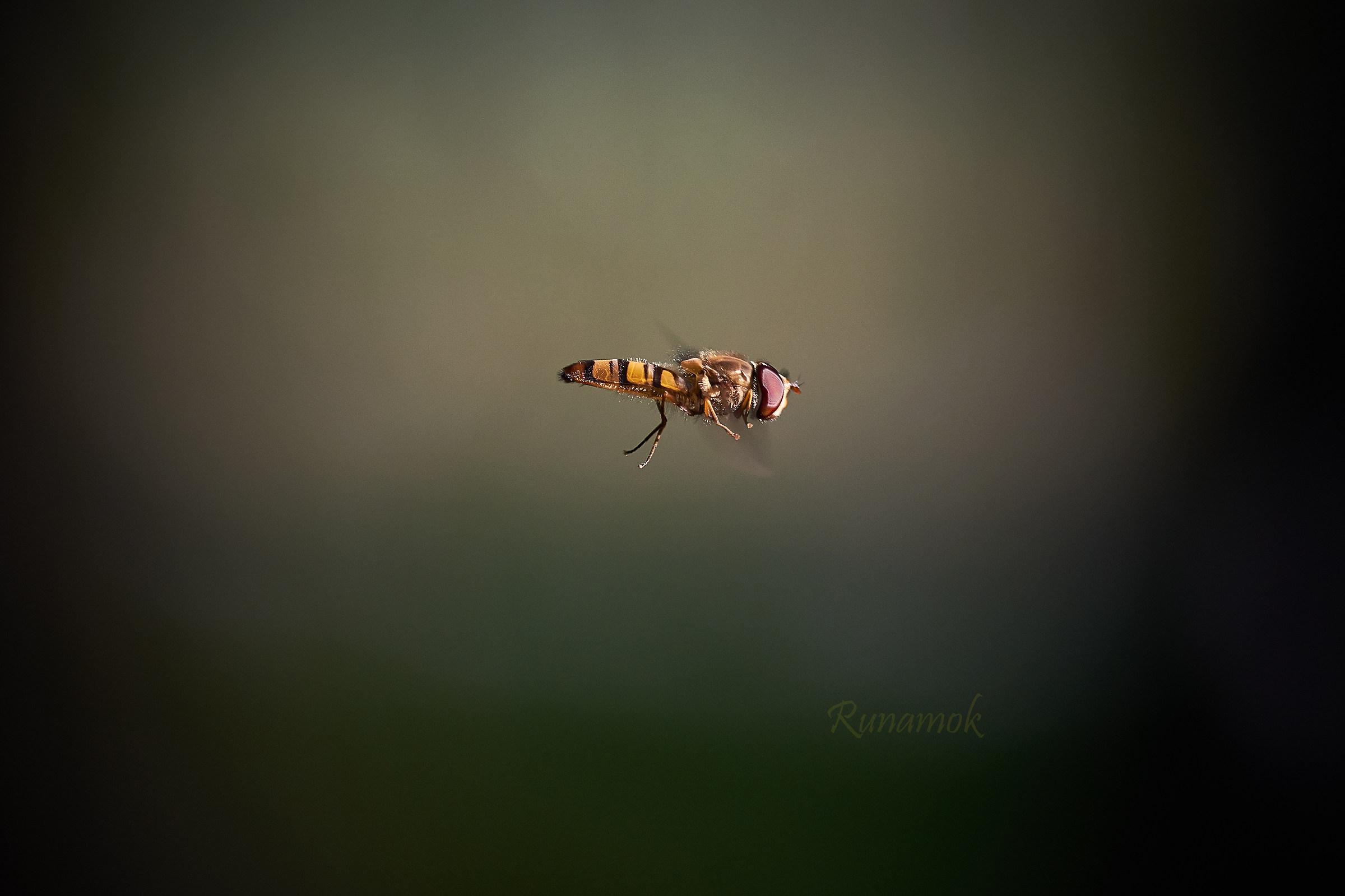 Sirfide in flight...