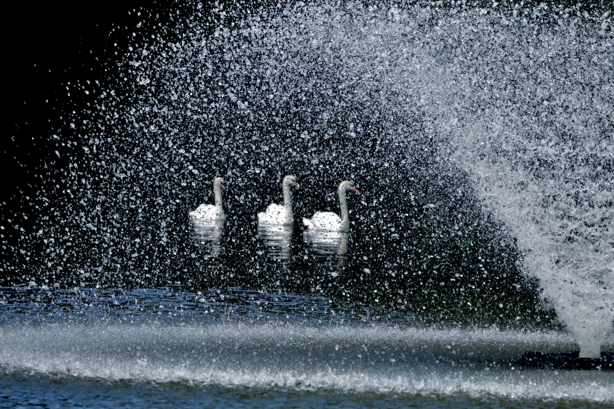 The Swan shower...