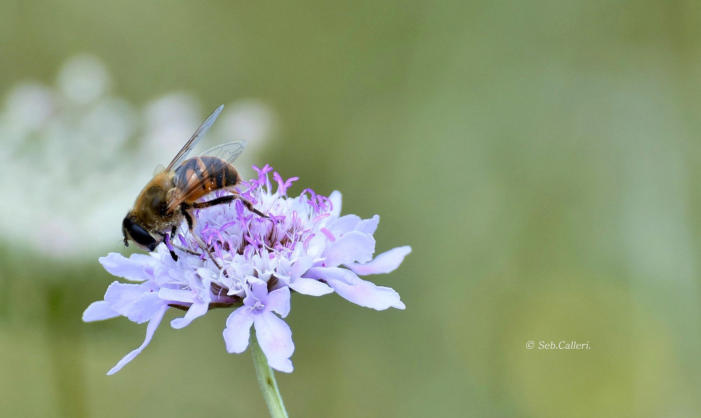 The Bee and the flower......
