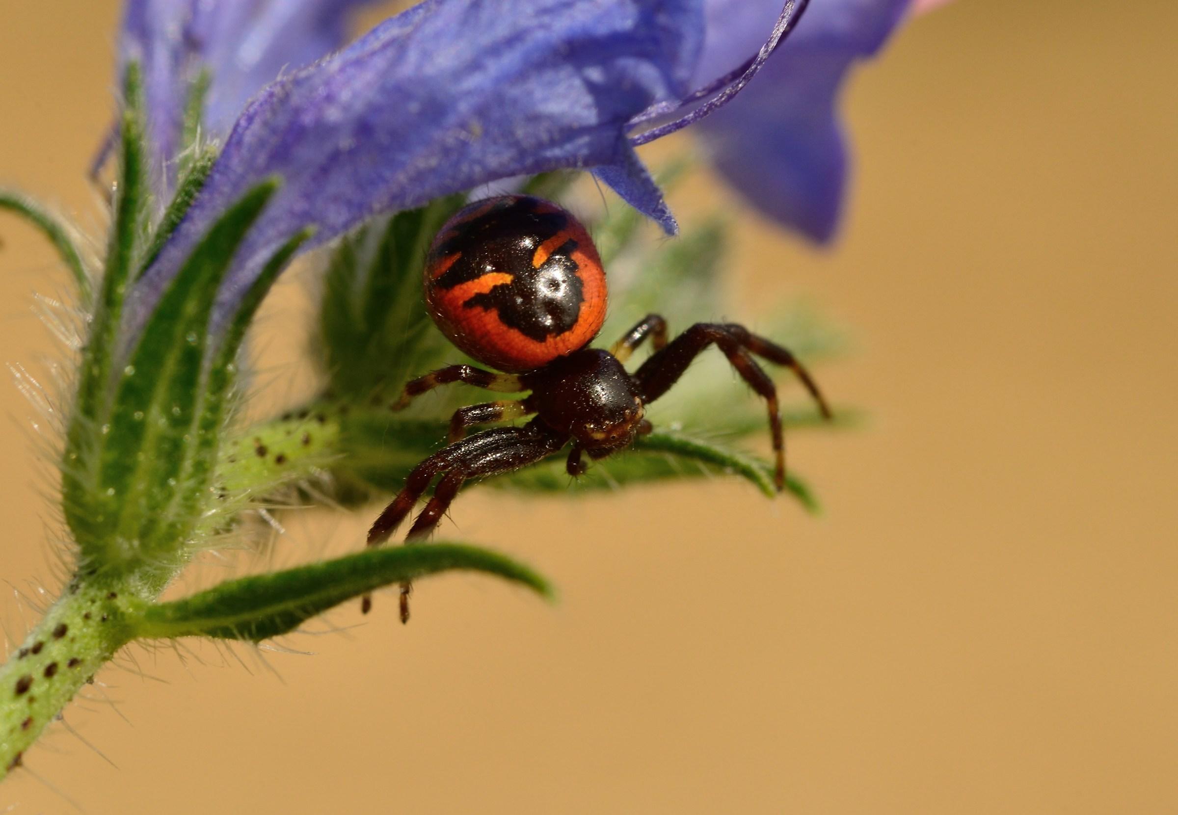 Spider ready x attack...