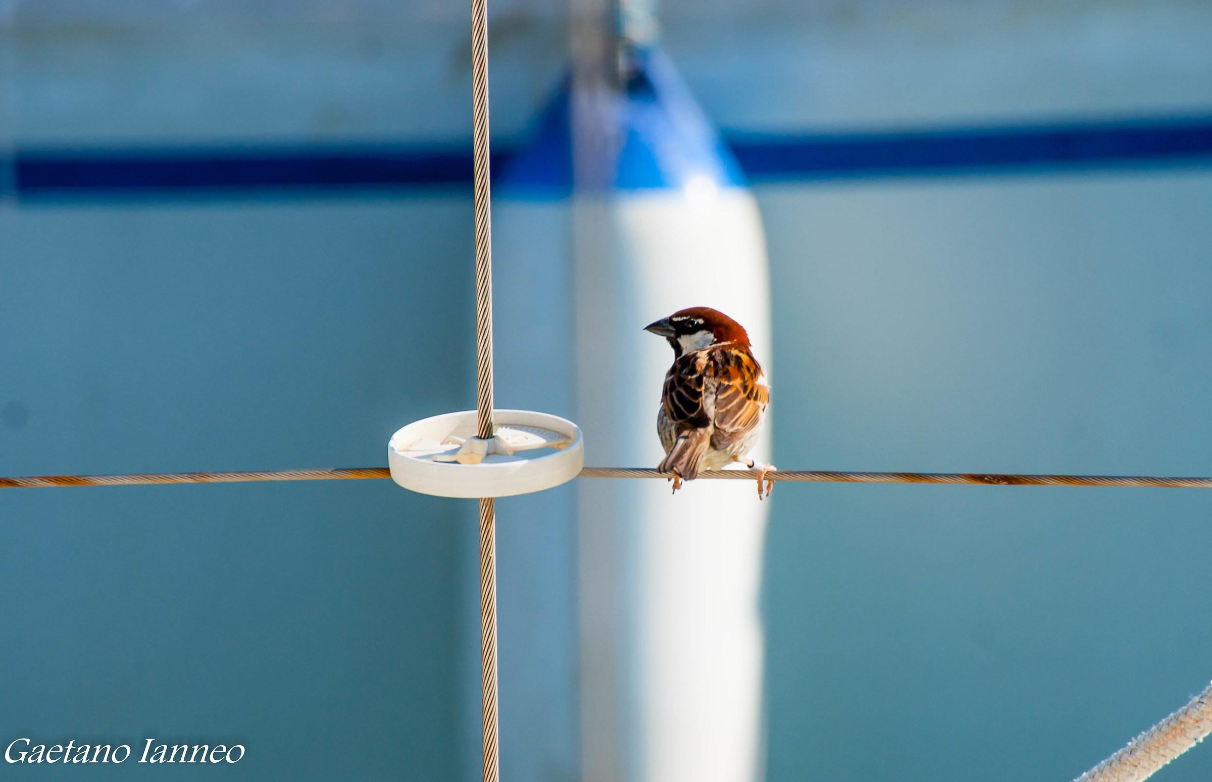 Fluke Sparrow...