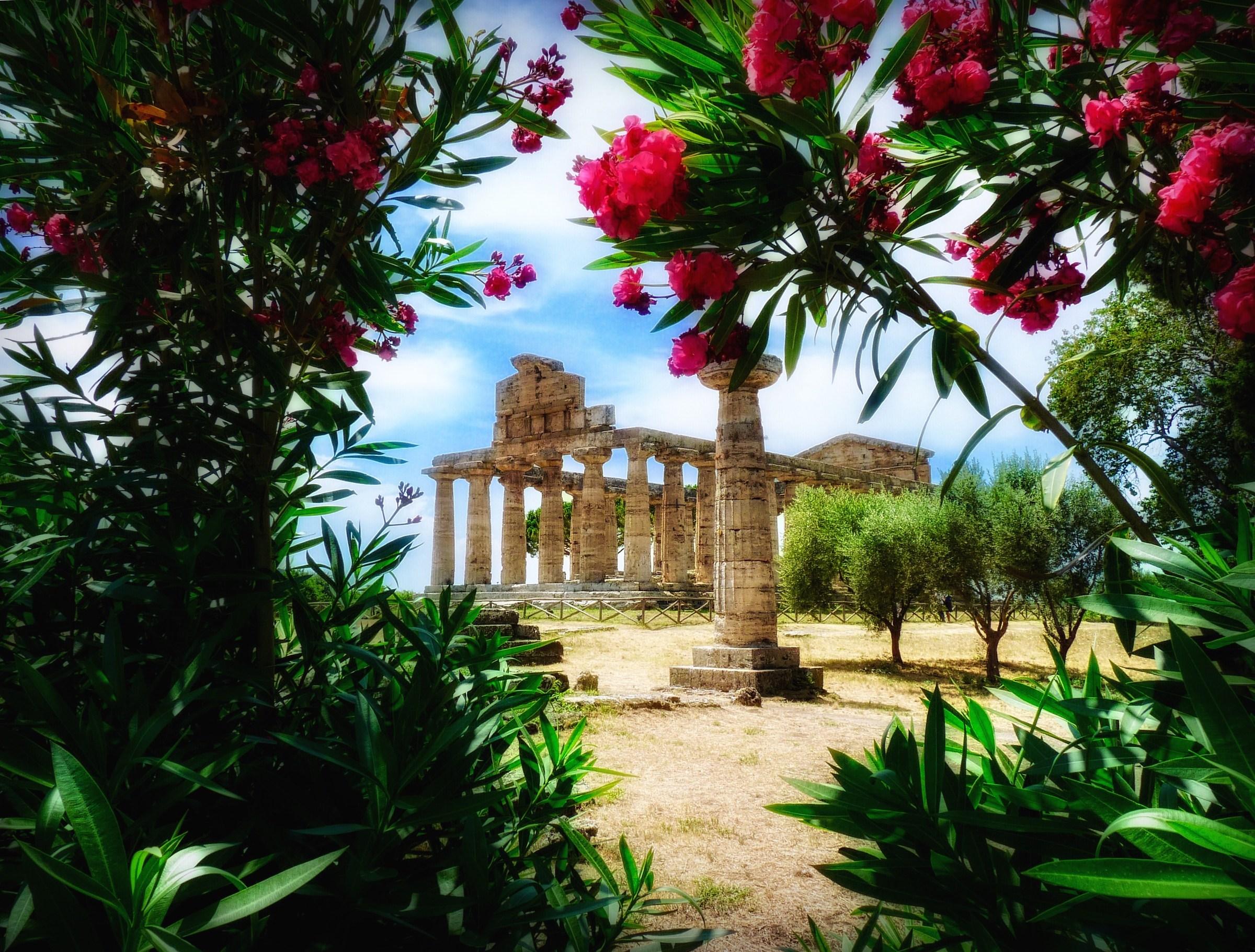 Paestum. The Temple of Athena....