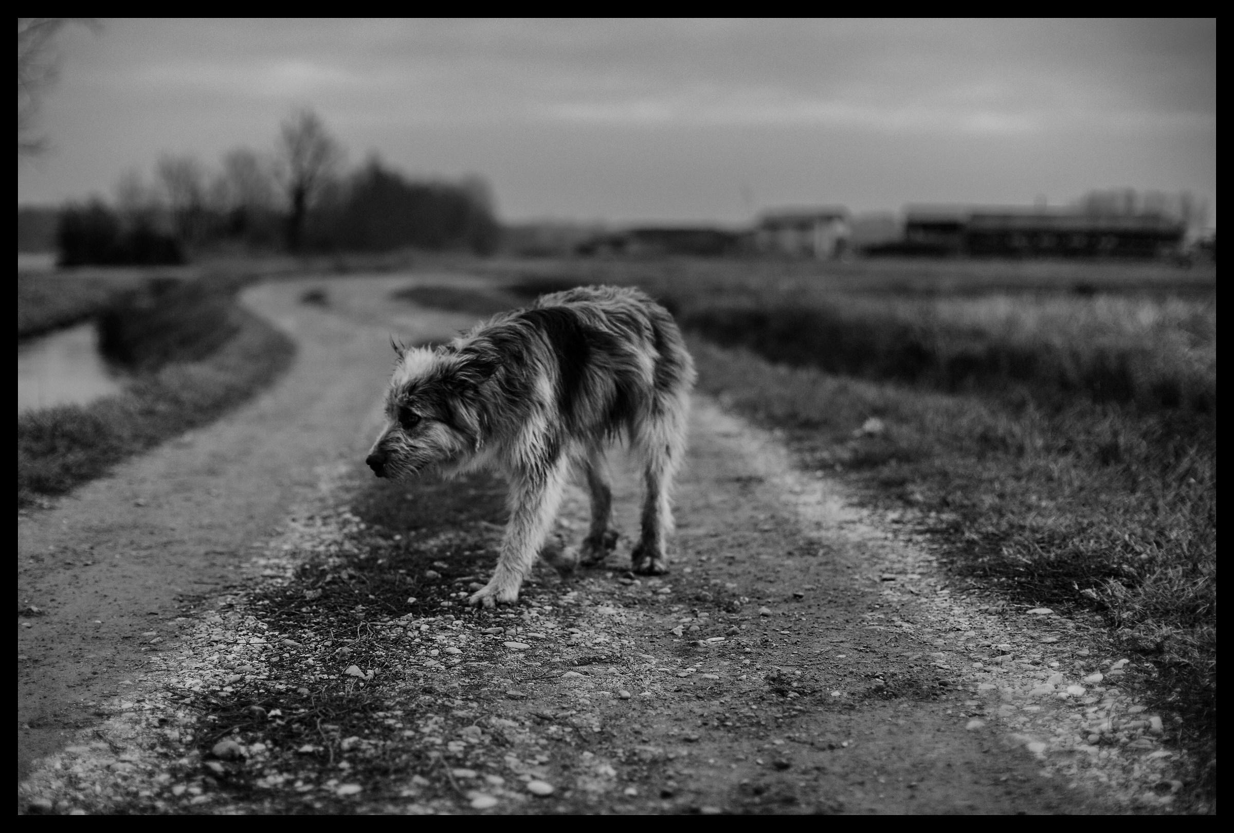 Docile encounters. Morimondo (MI)....