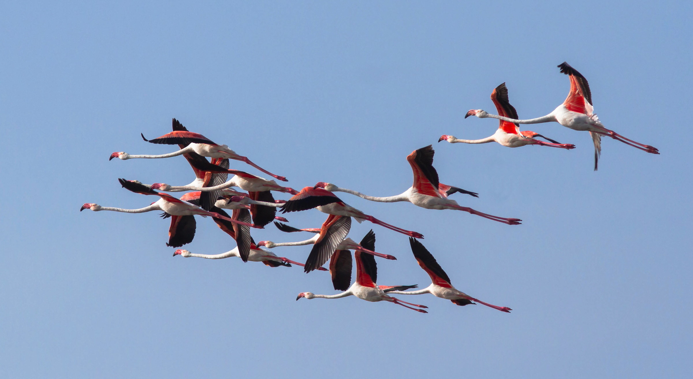 Flamingos on the fly...