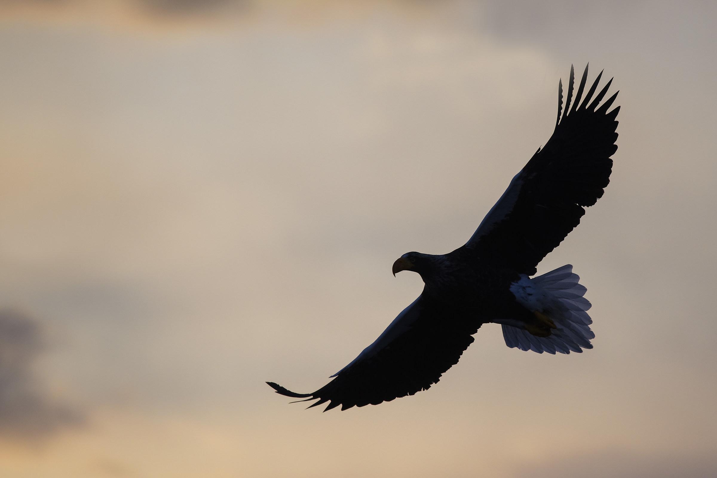 Sunrise in Flight...