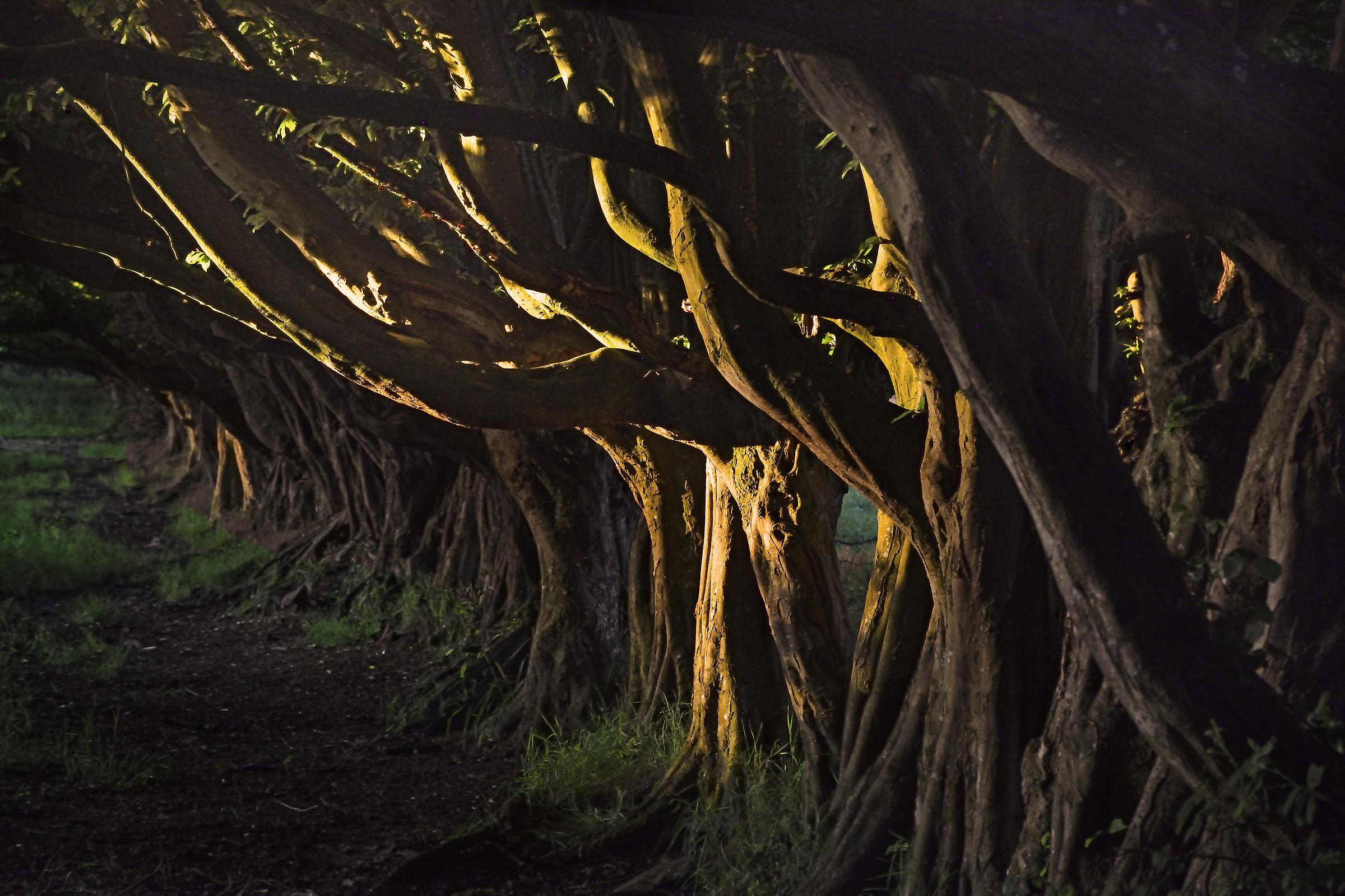 Un limite antico del campo, al tramonto...