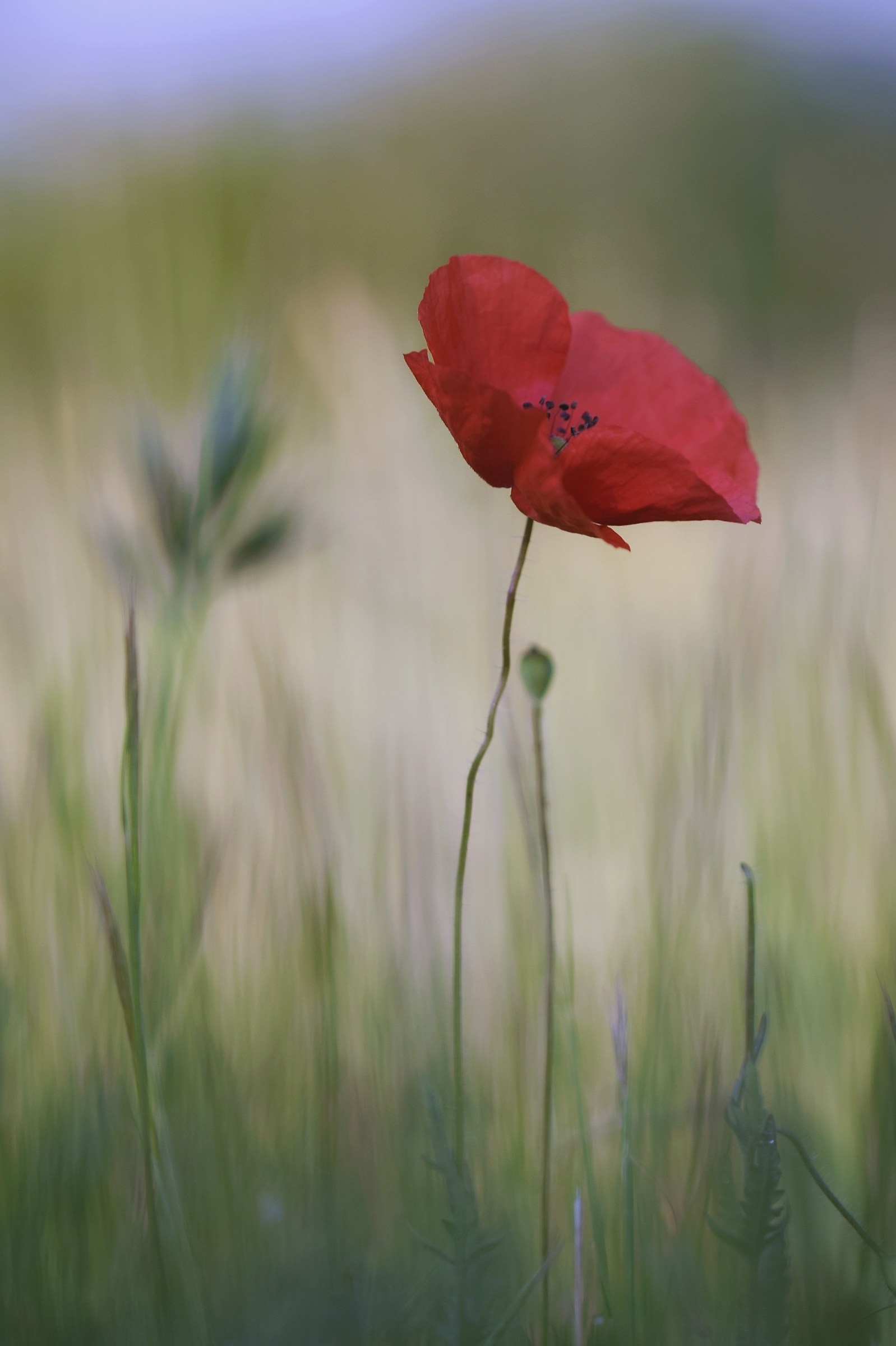 Poppies' stories 1...