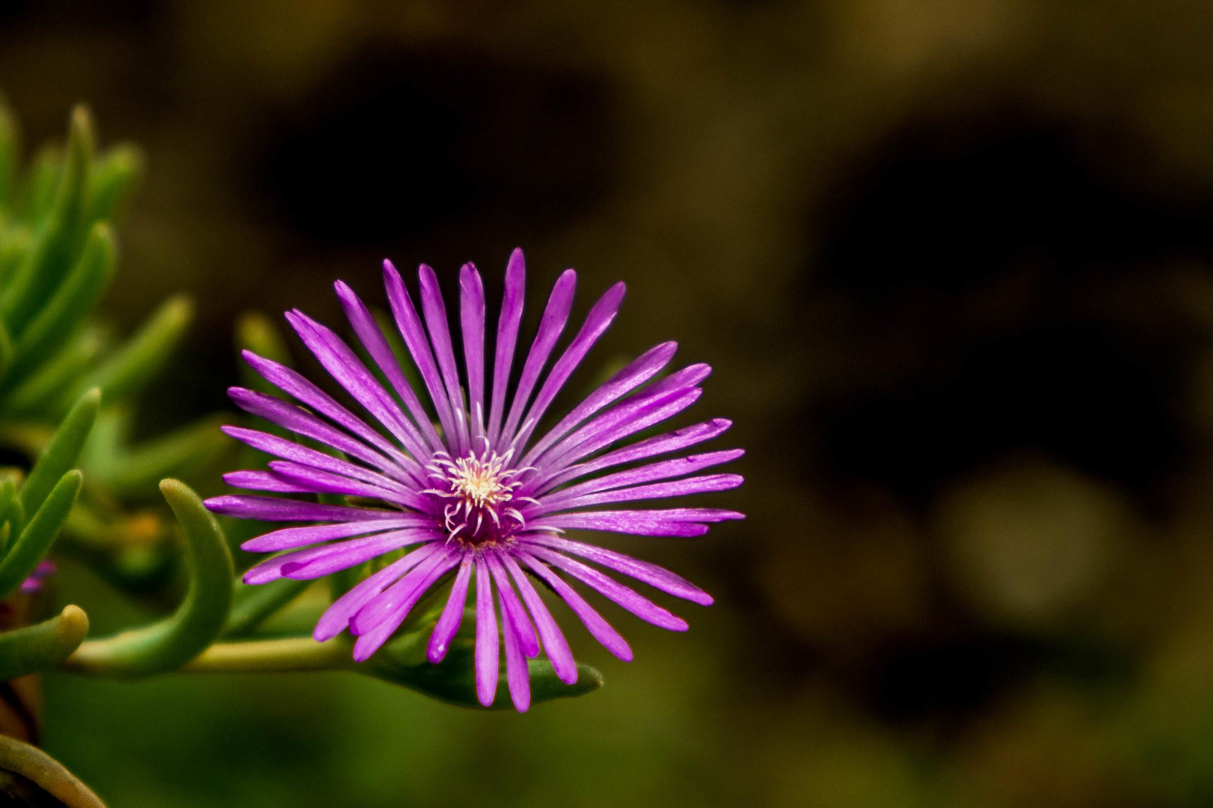 Bello come un fiore!...