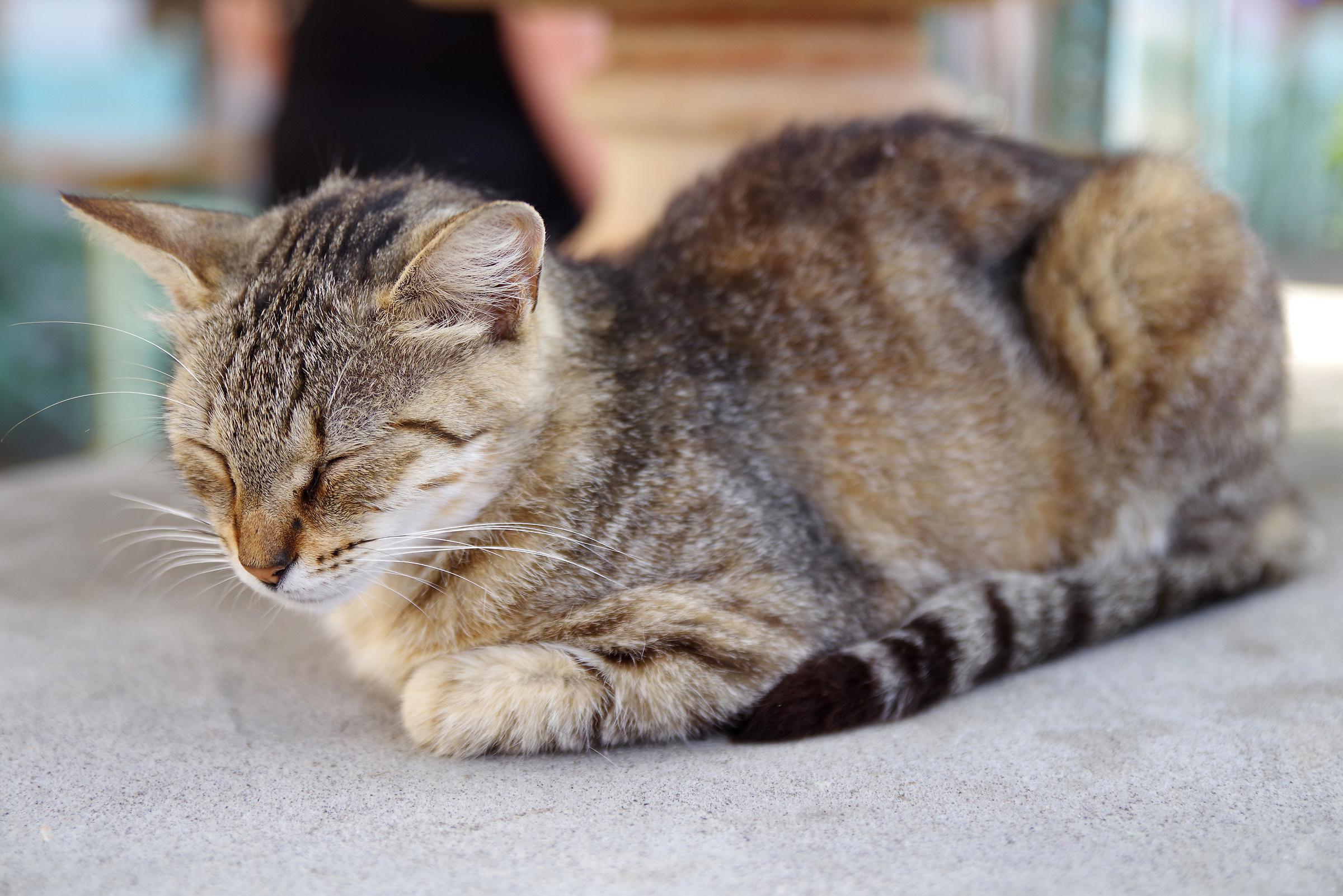 The siesta of the feline ...