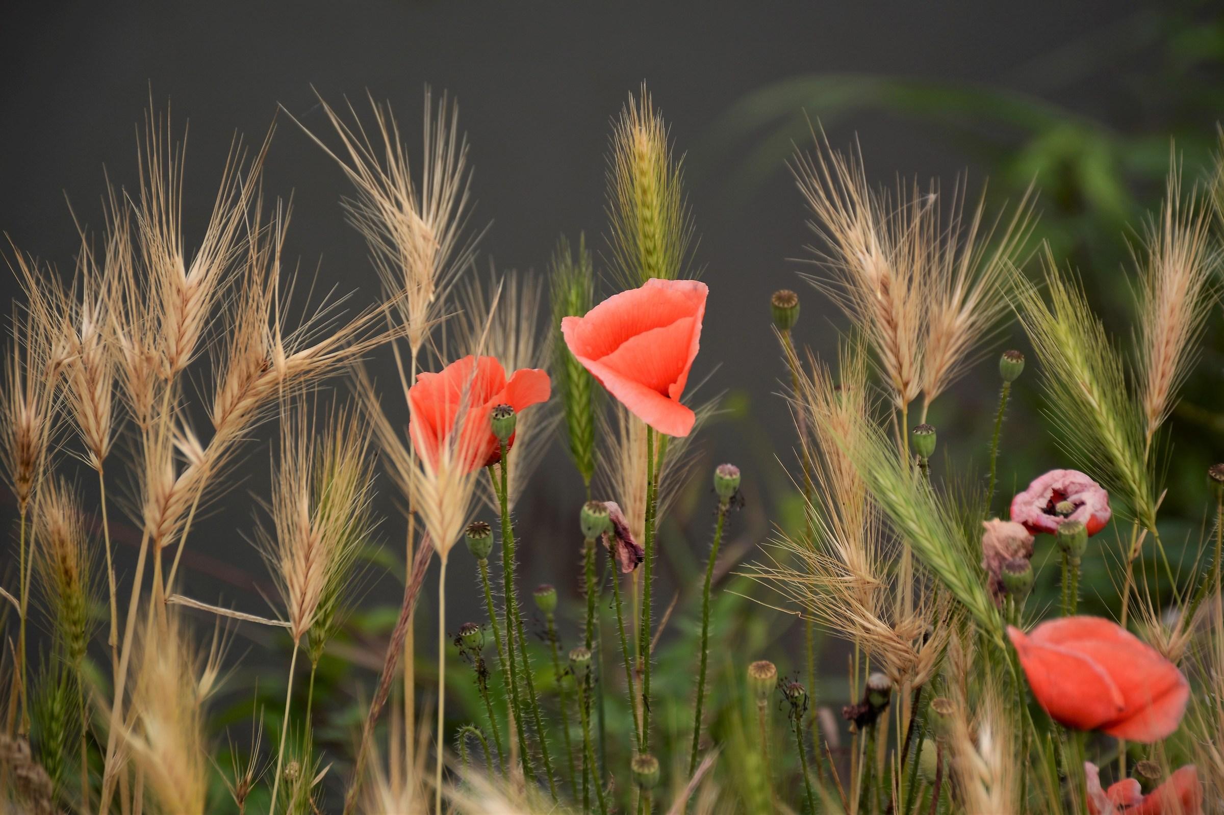 Rural simplicity...