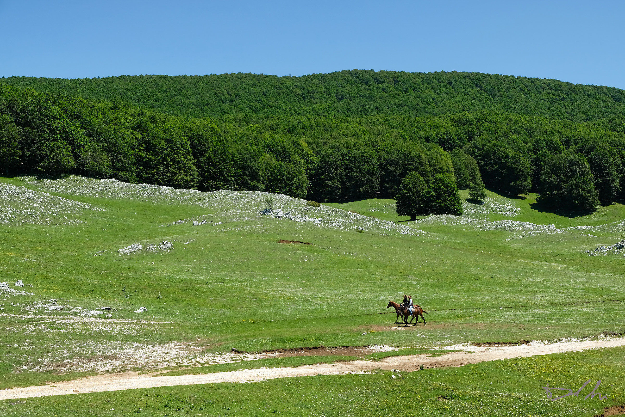 A cavallo nel verde...