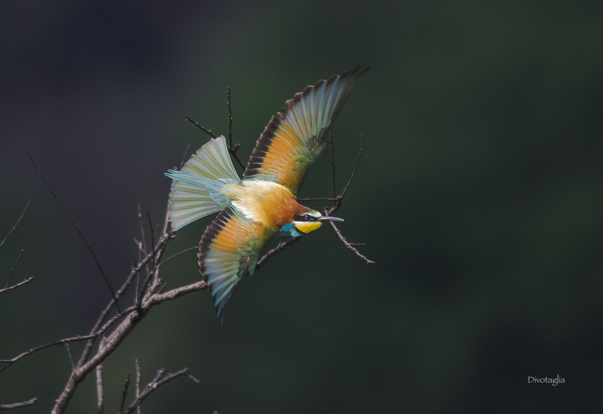 Eater in flight...