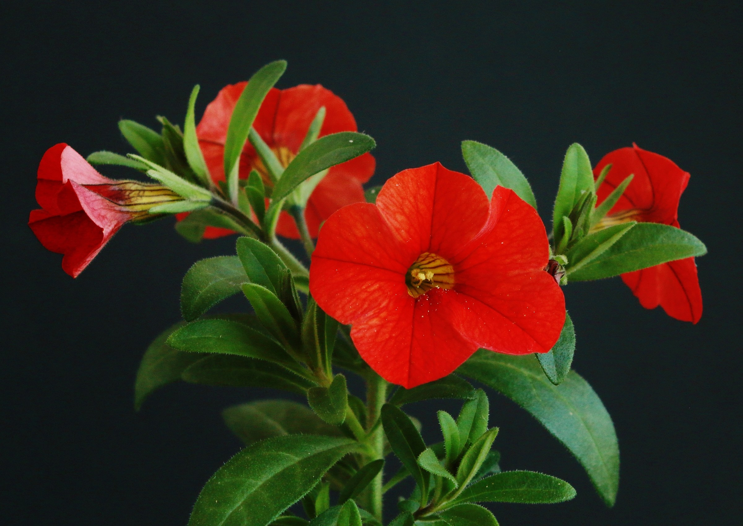 Red Flower 2...
