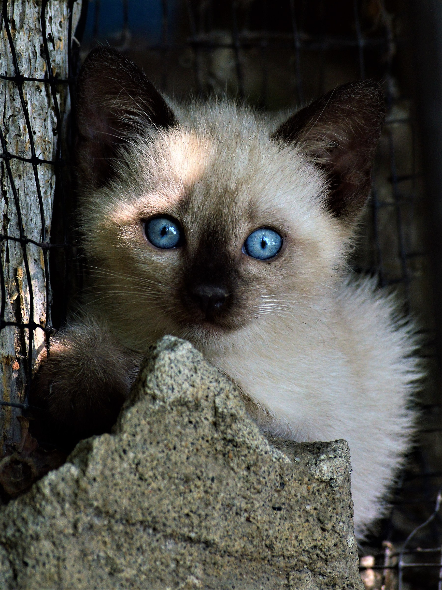 Feline mimicry...