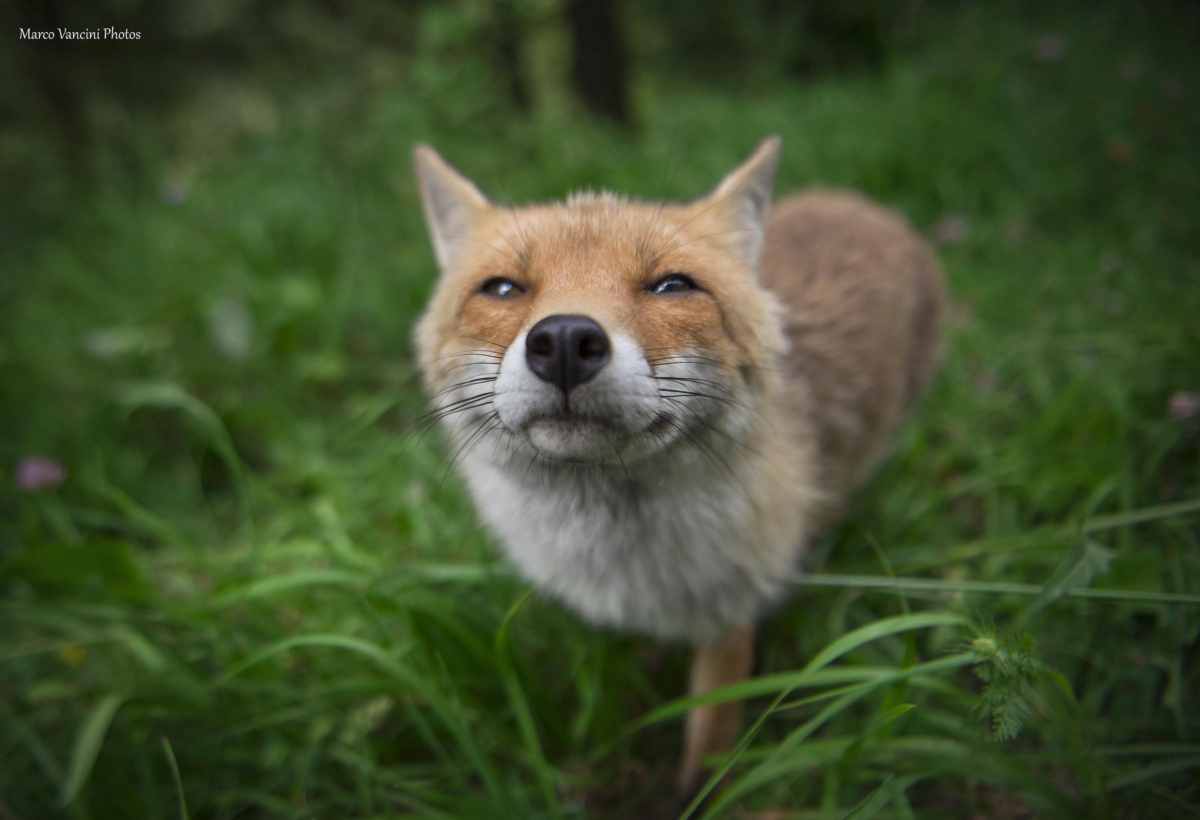 Hey, you human, you give me a kiss?...