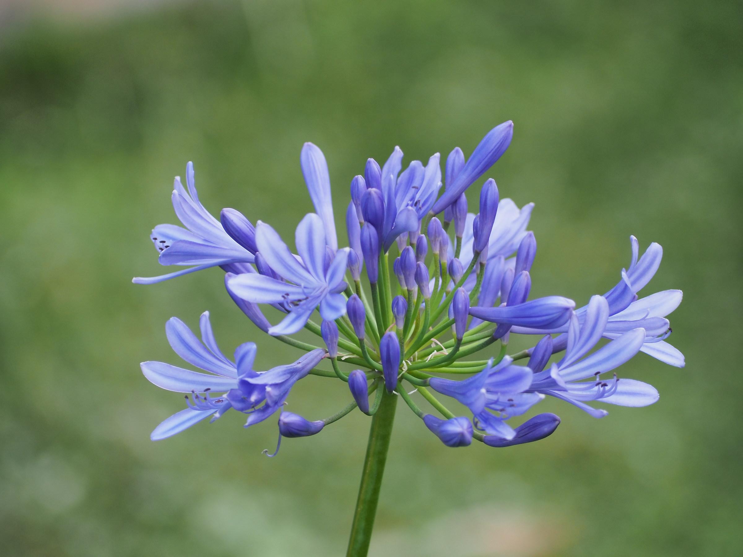 Blue Flowers...