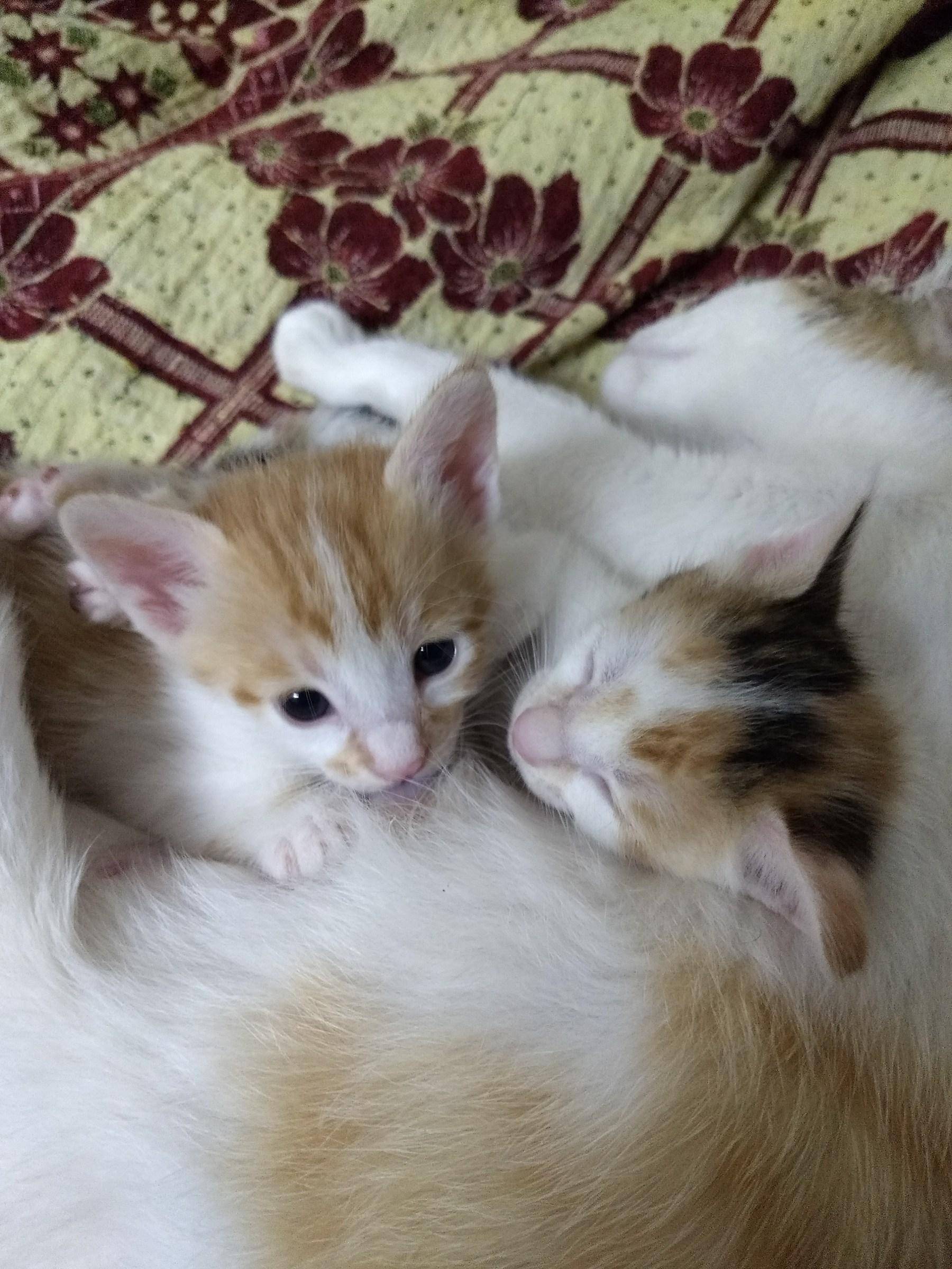 My kitten#3...