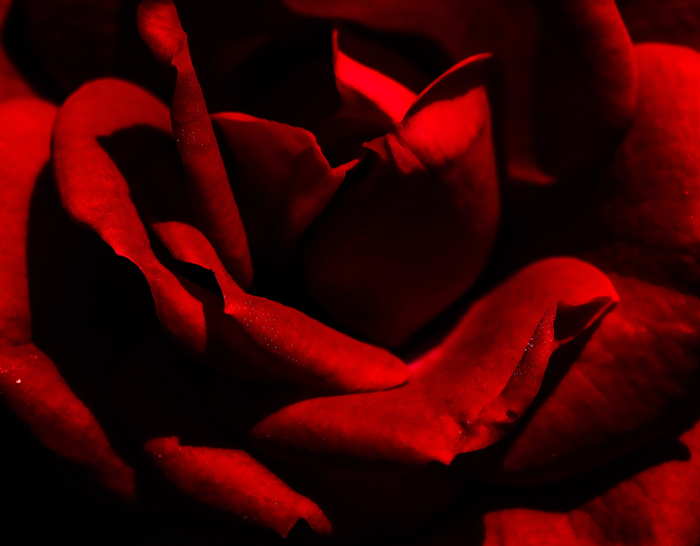 Prfondo red..........