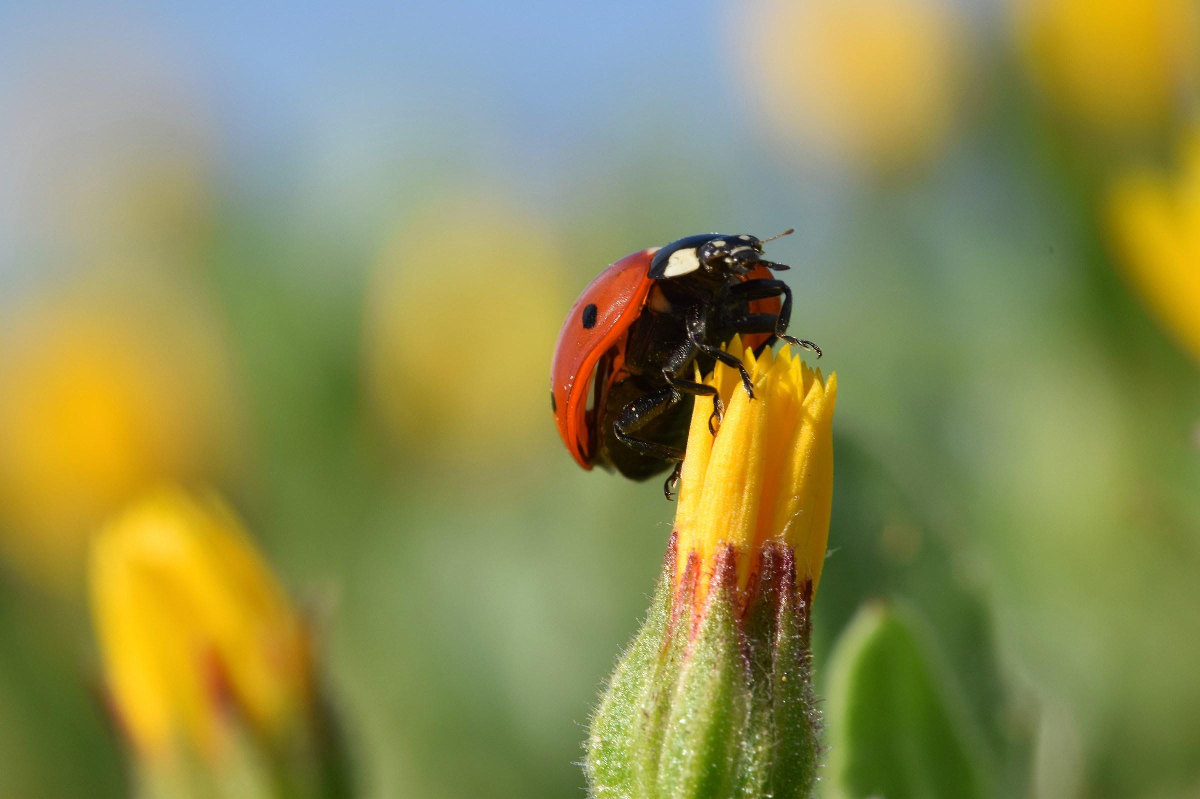 Ladybug's stories...