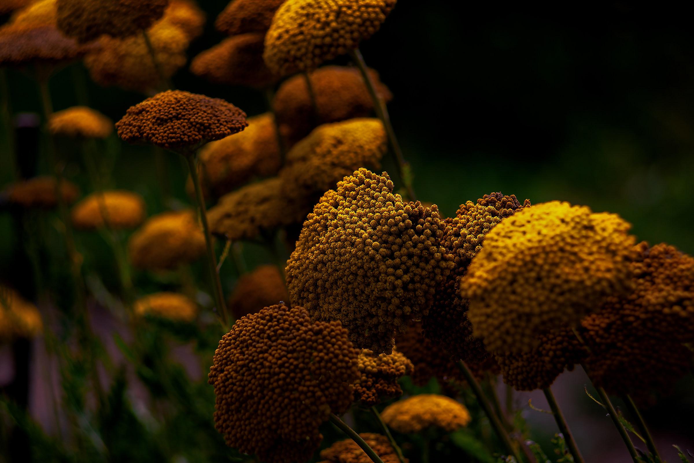 Strange Flowers Revisited ...