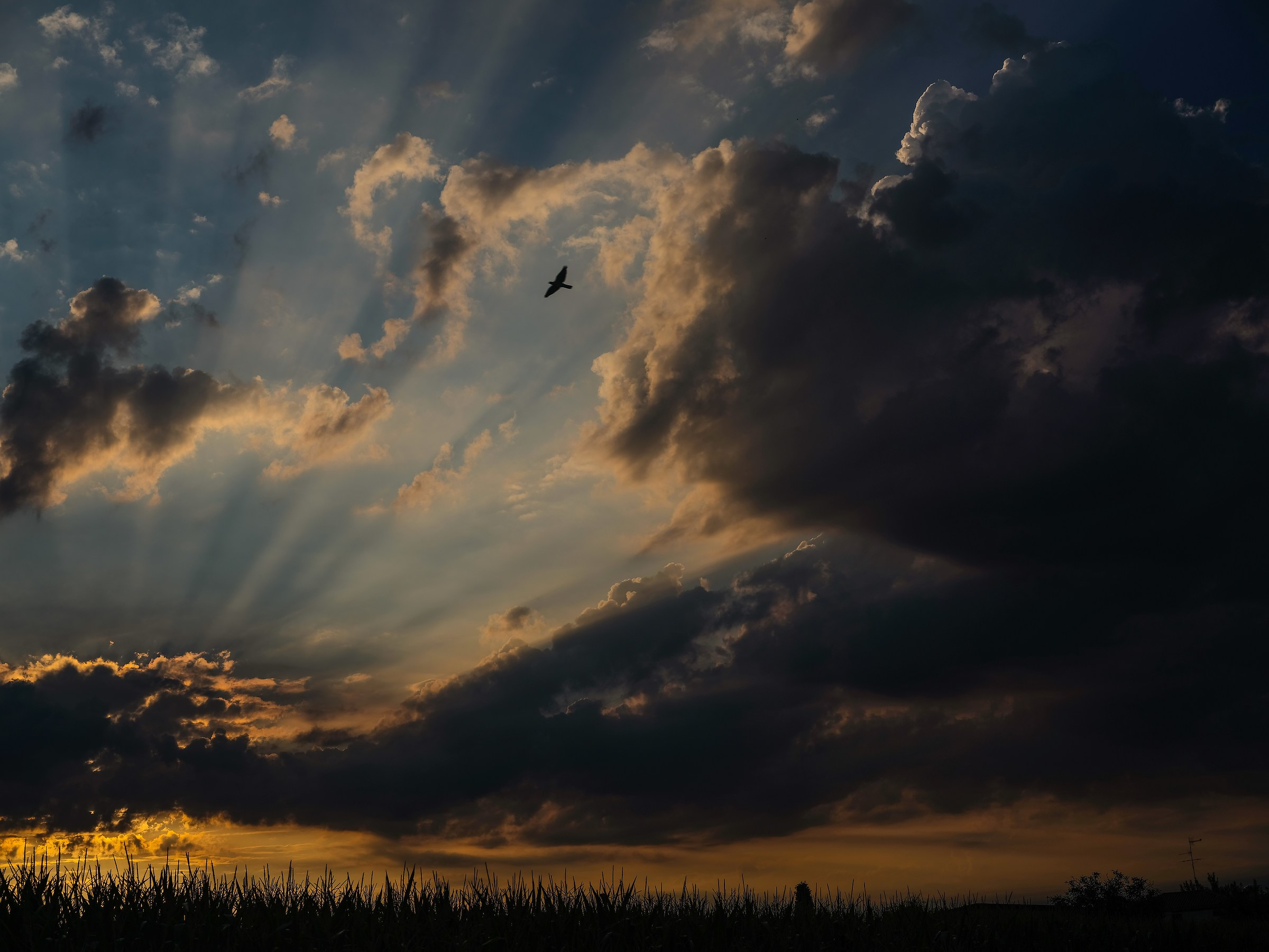 Sunrise with Flight...