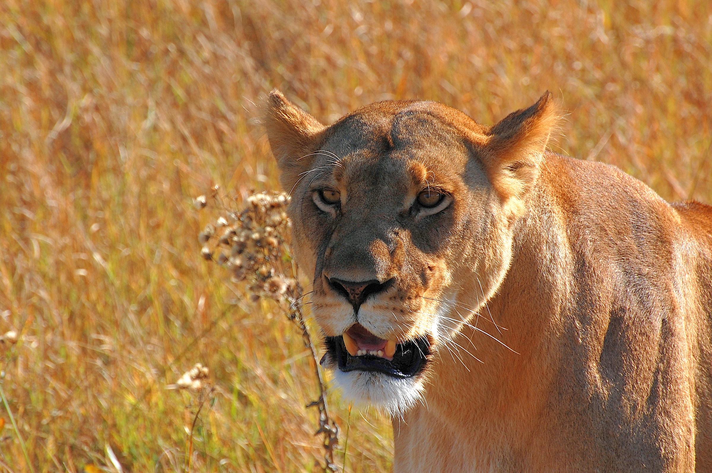 Botswana-Moremi Park: Smile...