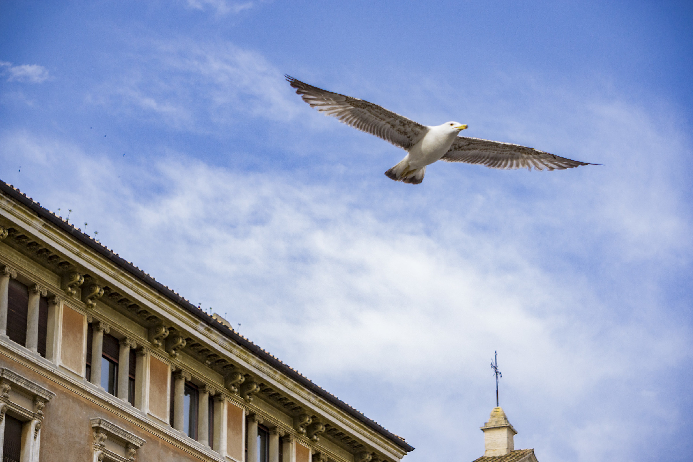 The Papal Seagull...