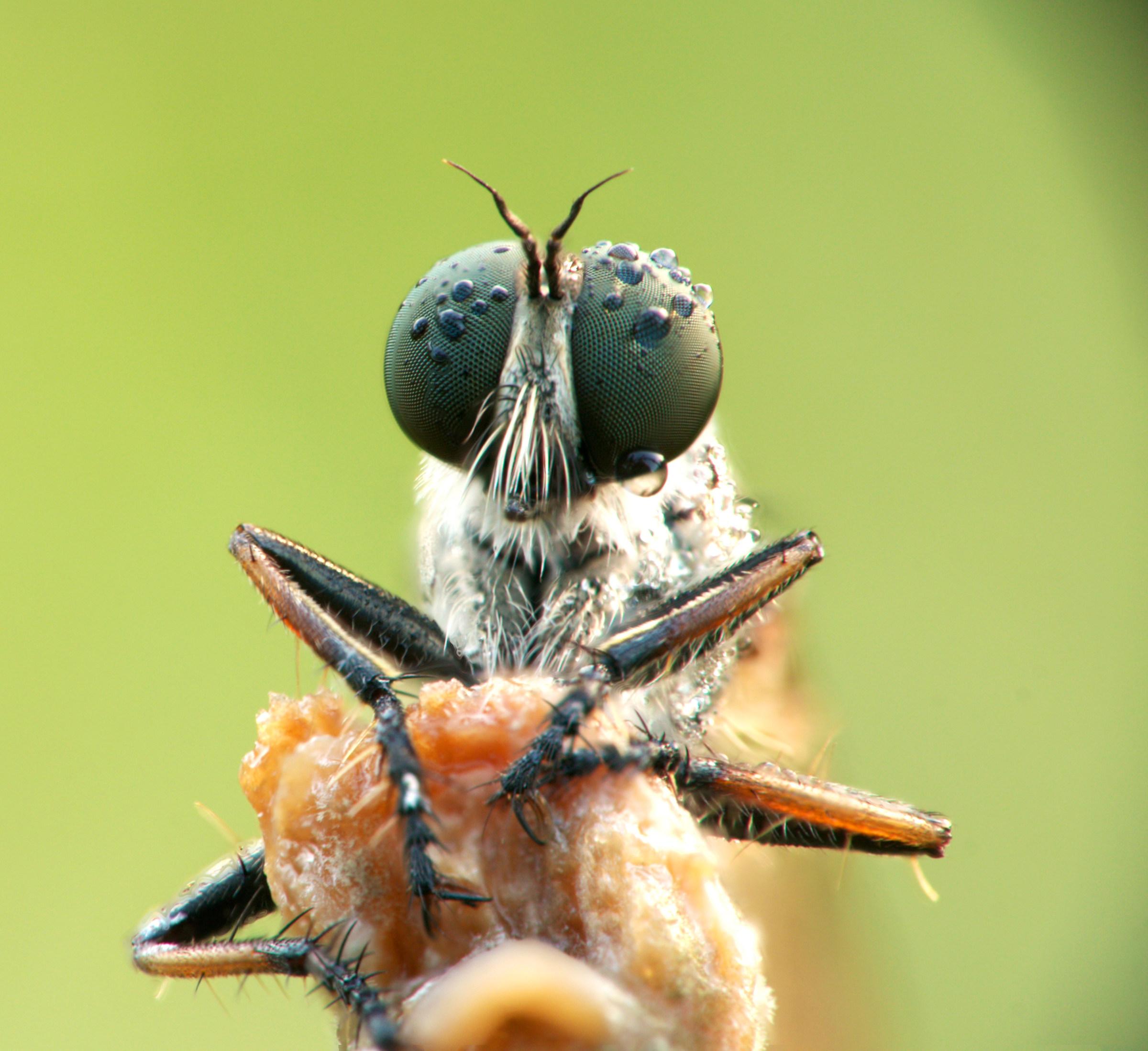 Hymenoptera (I think)...