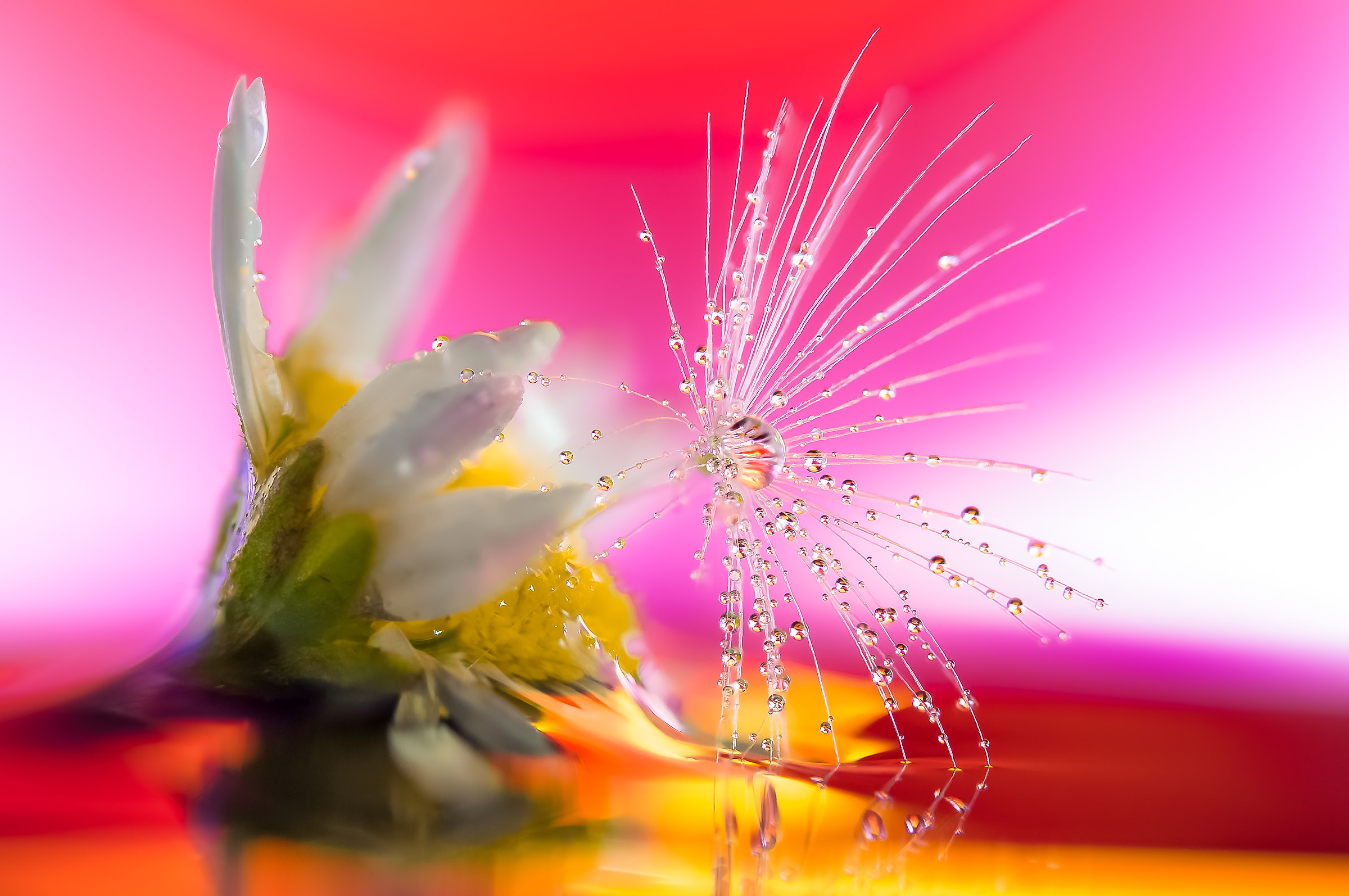 Drops Flowers Gocce Fiori Riflessi Mario Nicorelli...