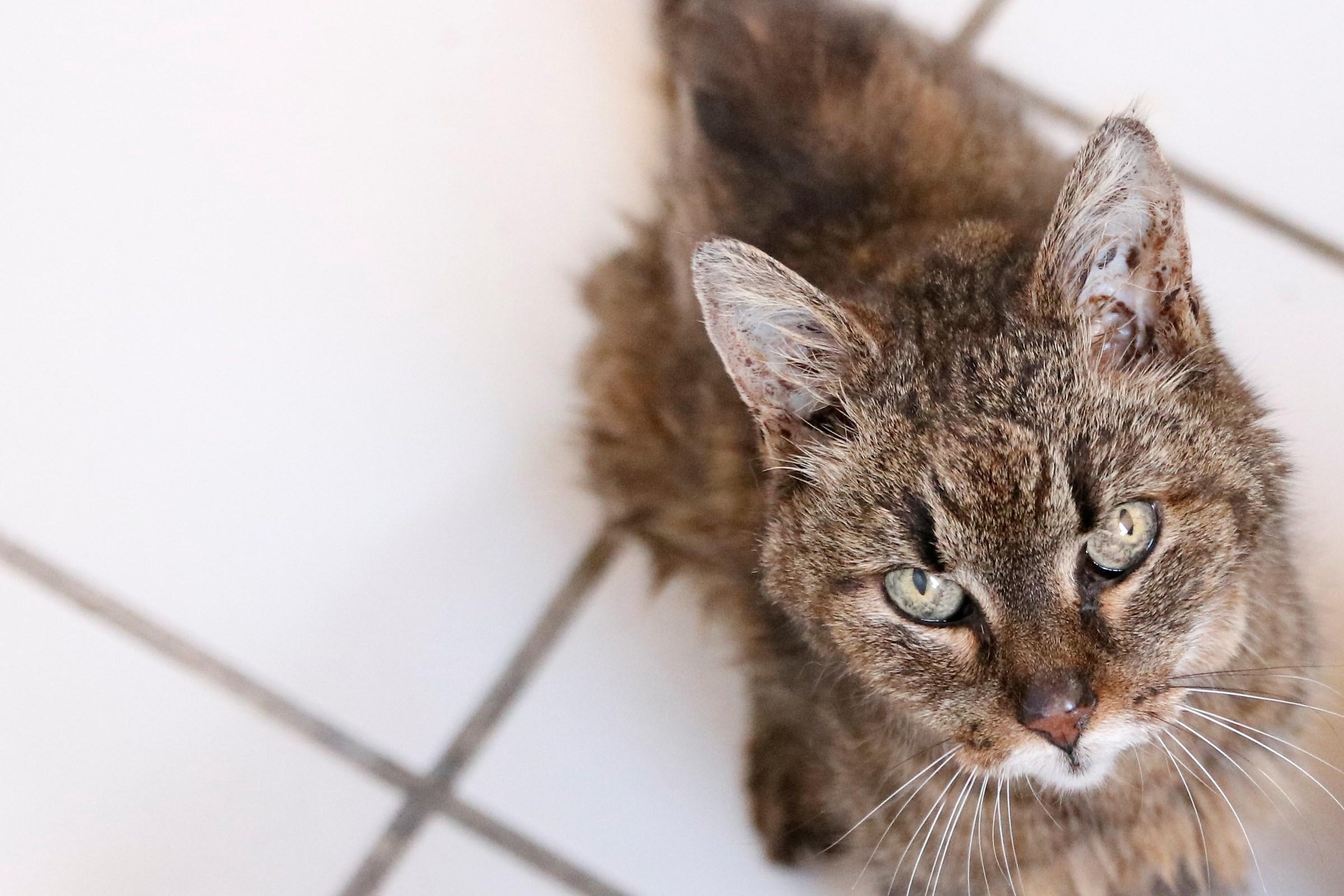 Eighteen years of Kitten.......