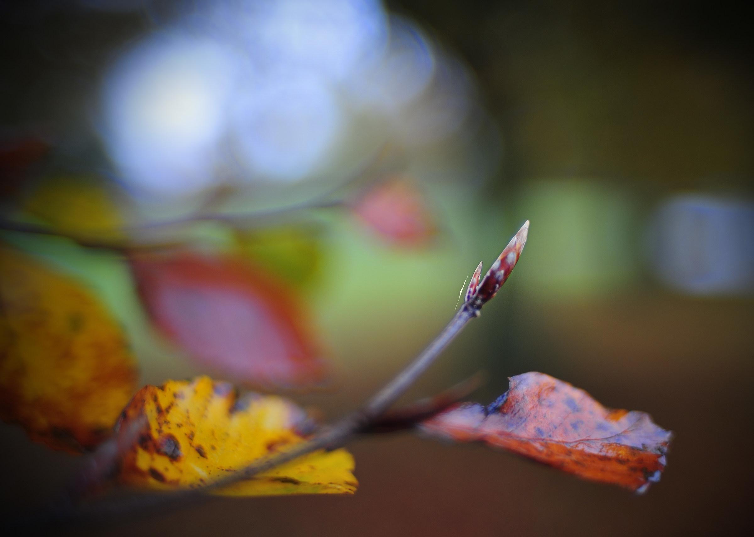 Germogli di autunno...