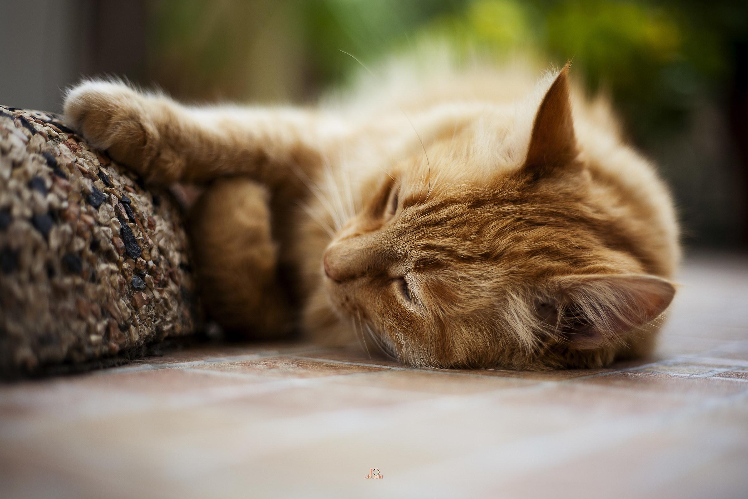 Cat 5...