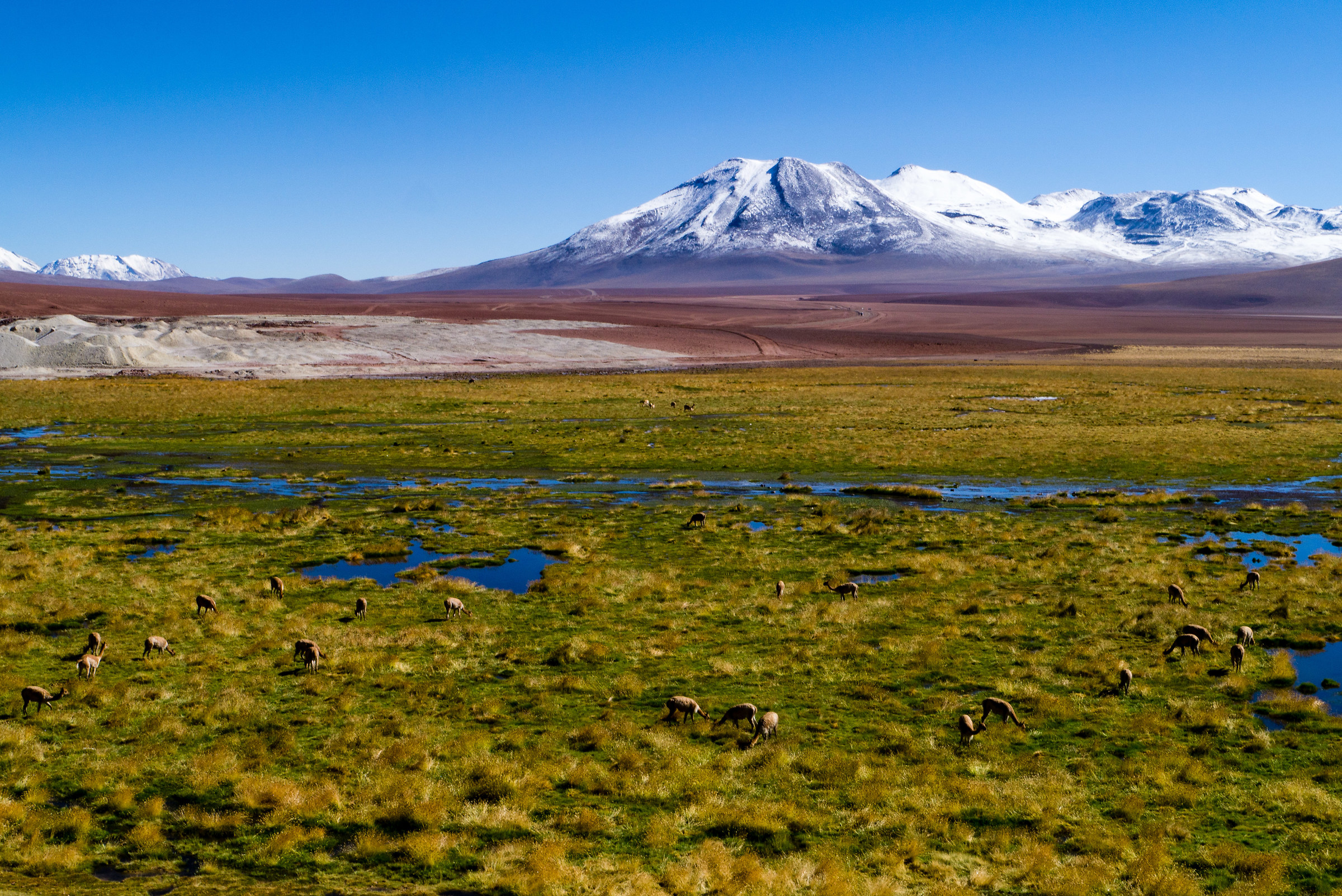 Andean pasture...