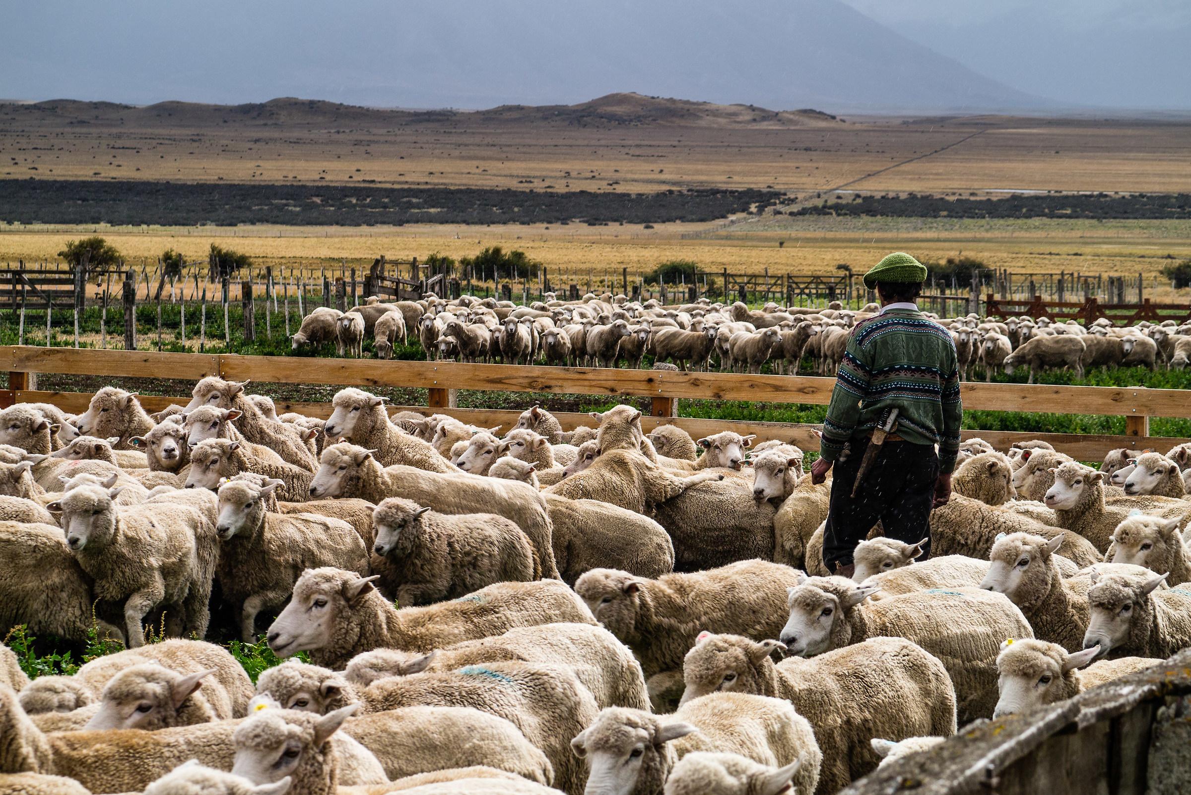 Herd...