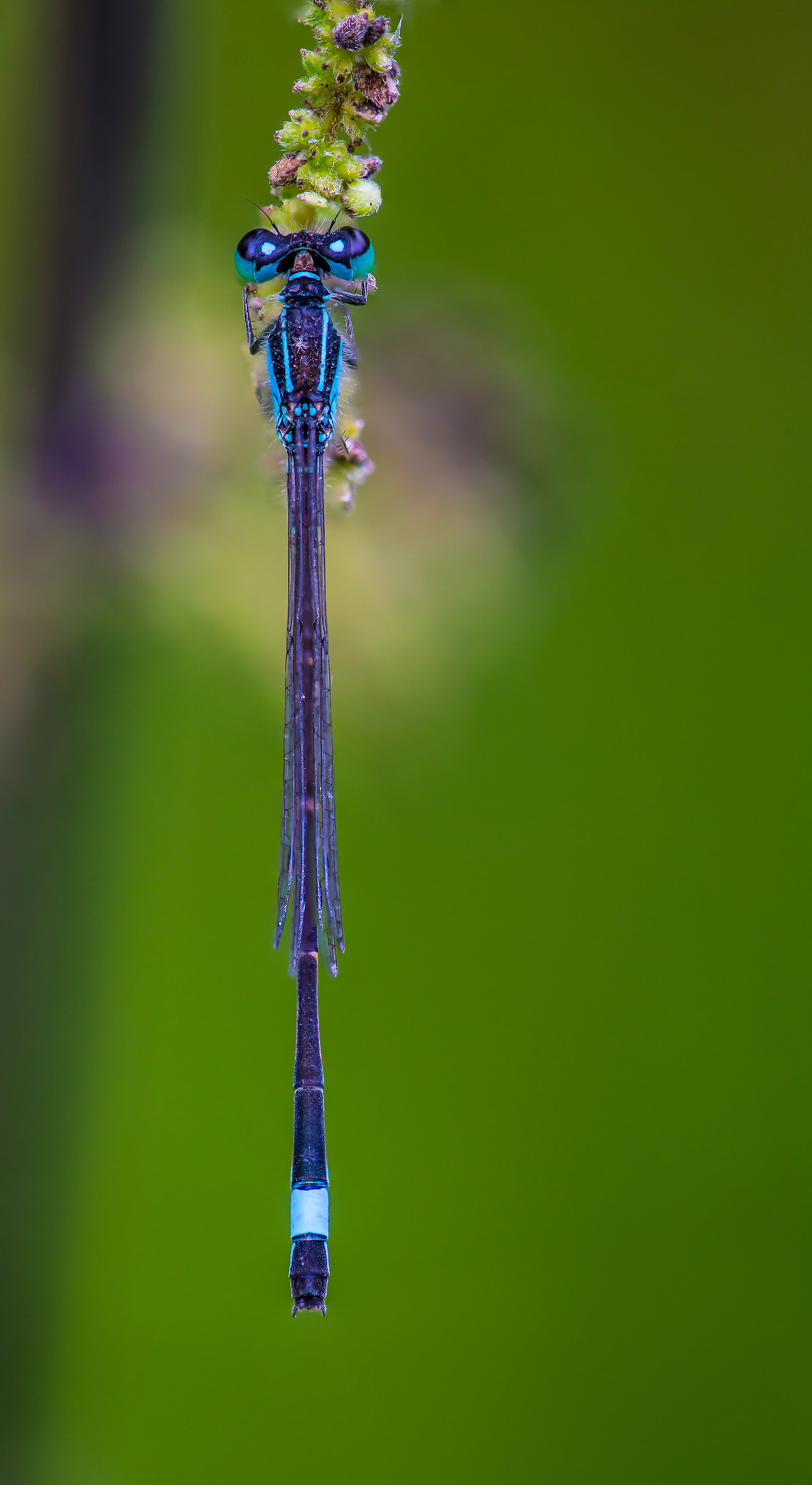 Dragonfly with sporty livery...