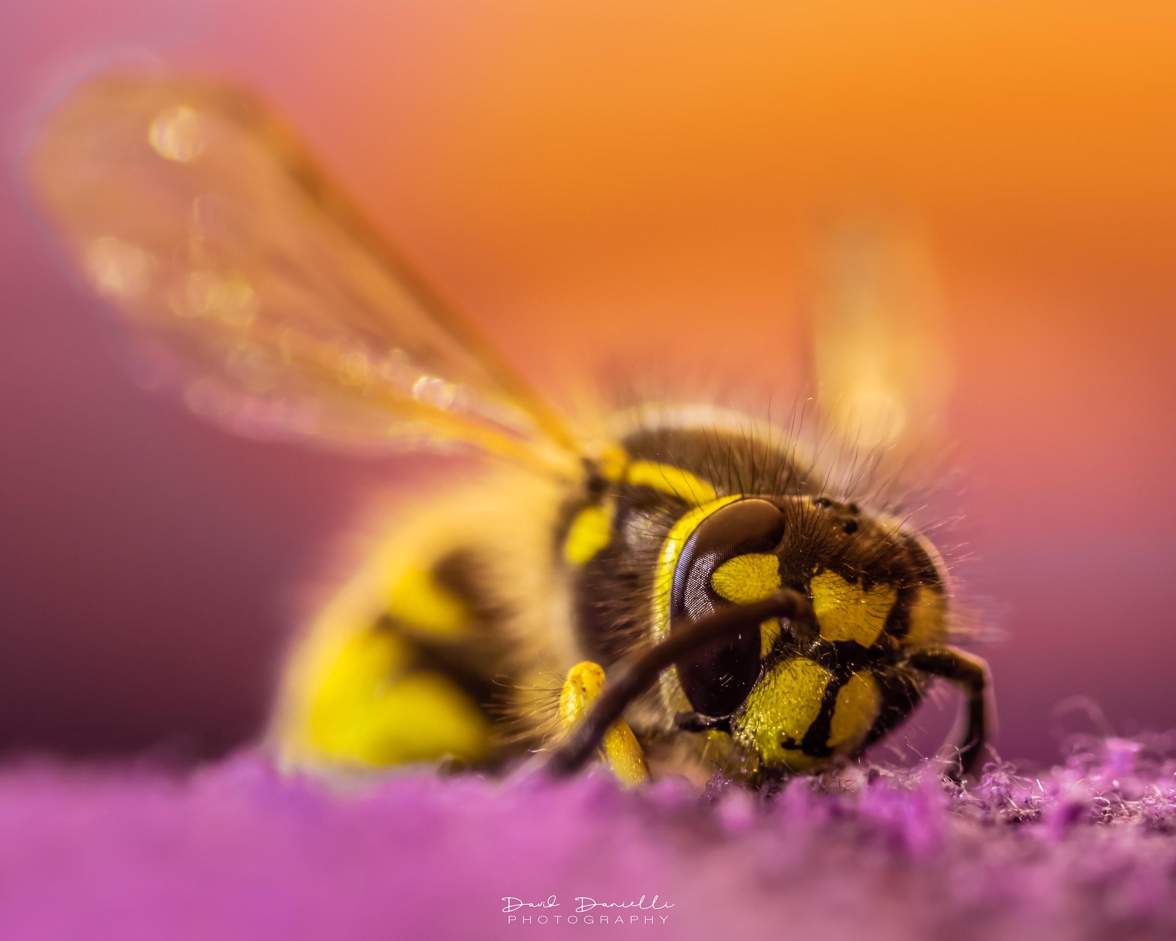 Una calda giornata per una piccola vespa...