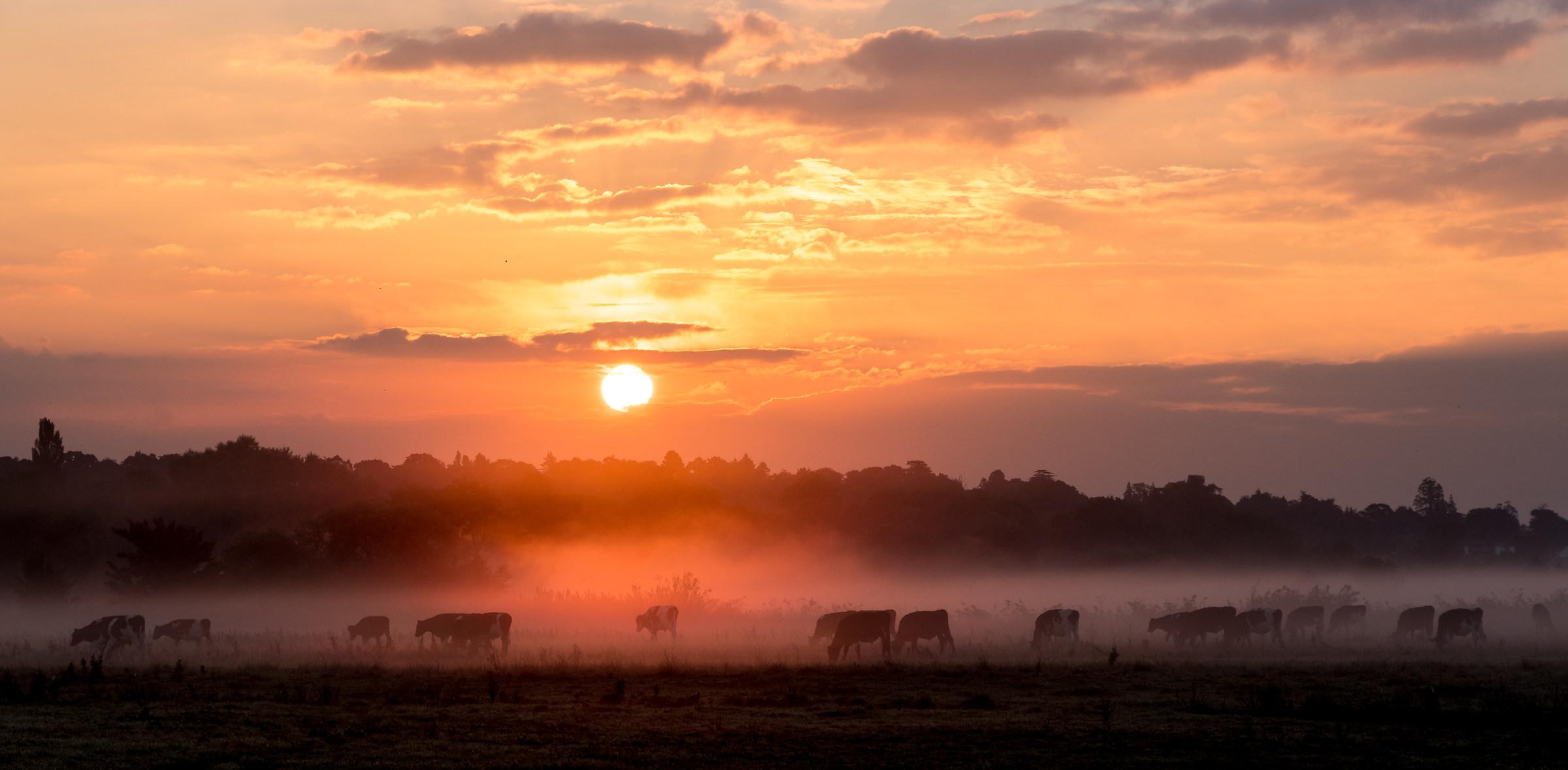 The Serengeti of Dorset, southern England...